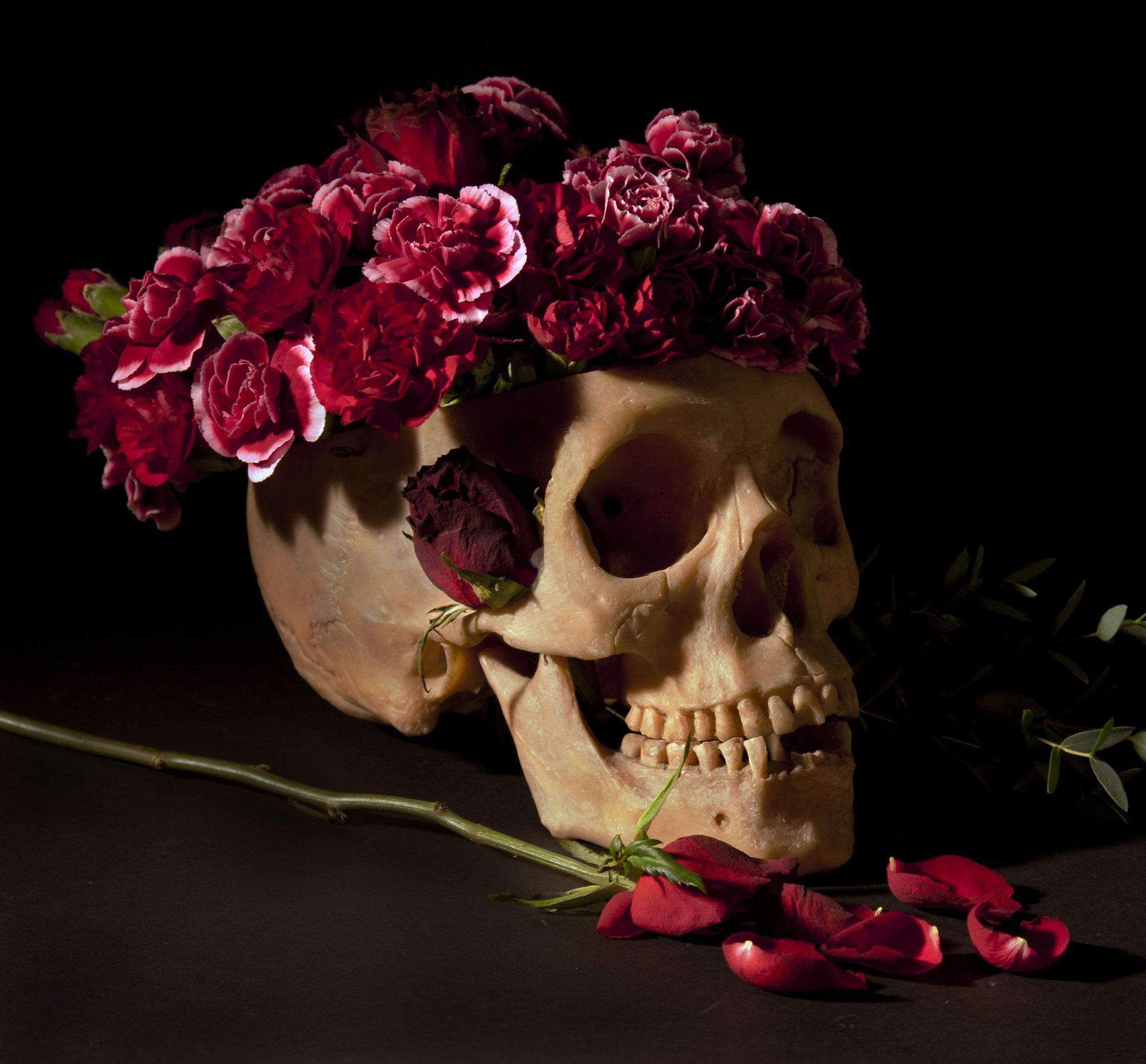 Vanitas Skull, colour still life of skull with flowers