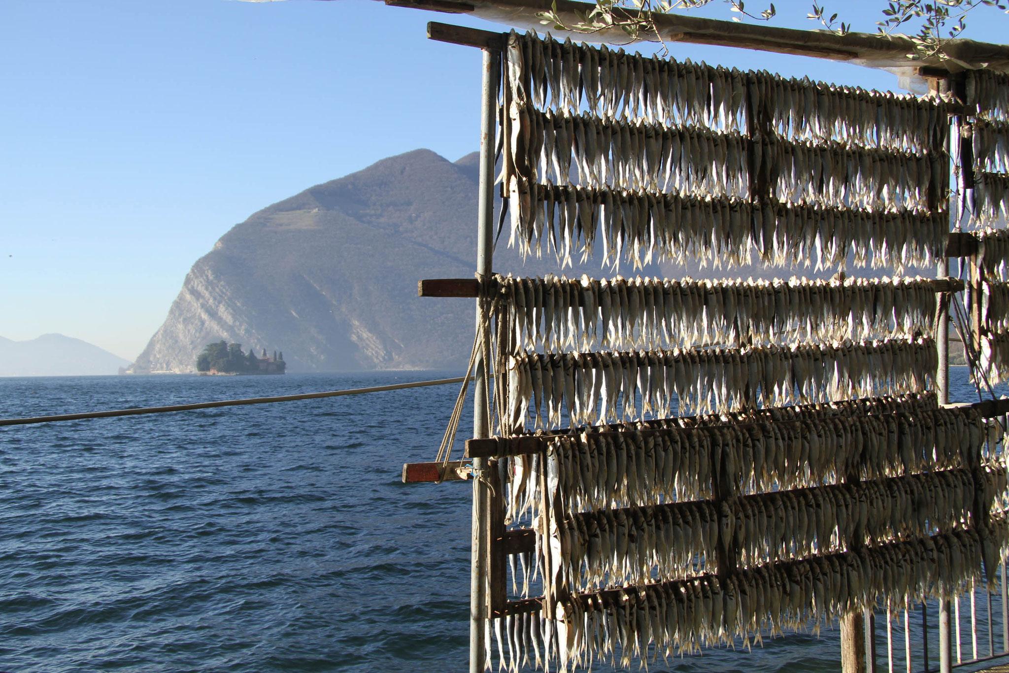Visita guidata Lago Iseo Franciacorta