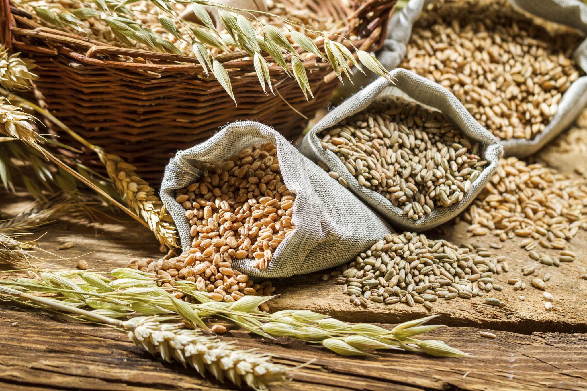 Visita botanica gastronomica: cereali
