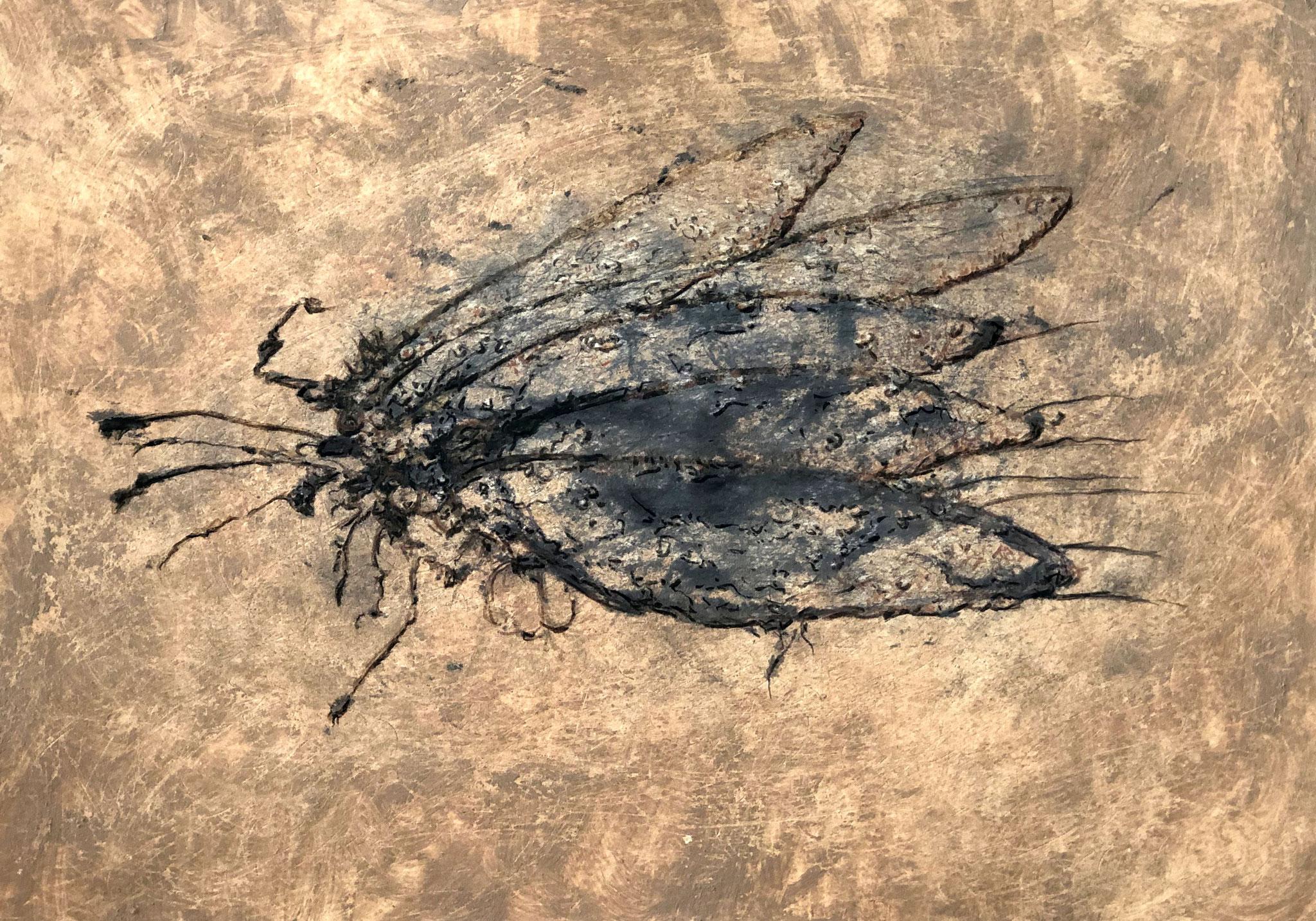 RETINTO III    Erden, Tintensekret vom Kalmar und Olivensaft auf Papier - 21 x 29 cm