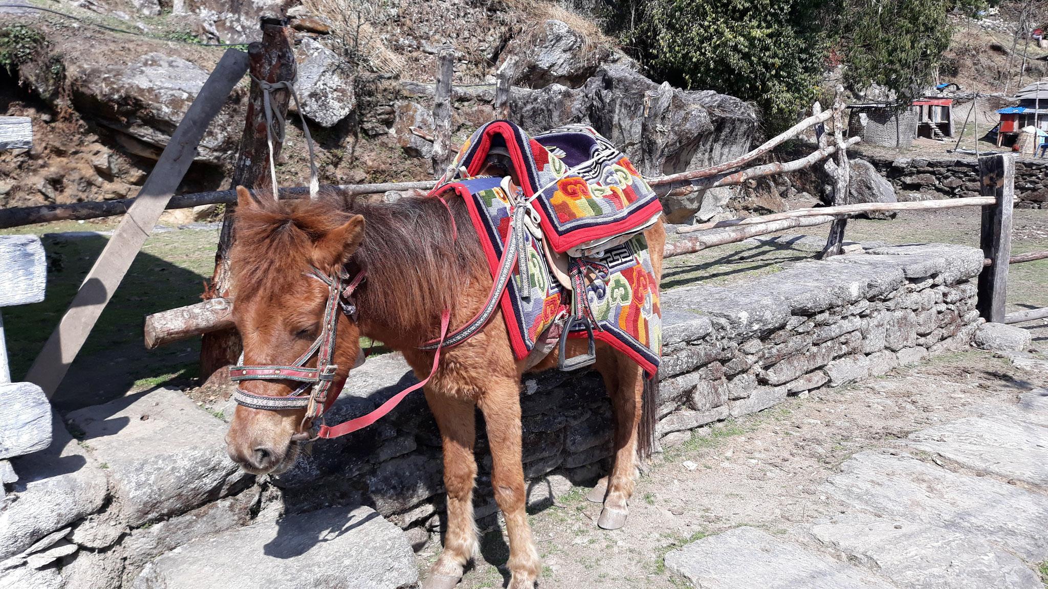 Poon Hill möglich per Pony Express