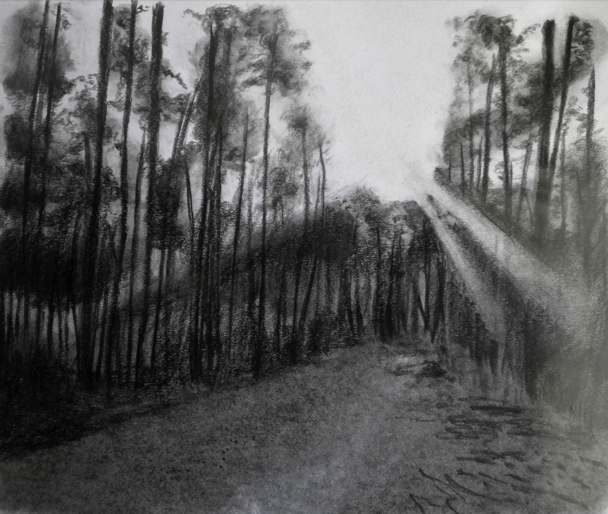 Waldstück bei Jüterbog, Graphit, A4