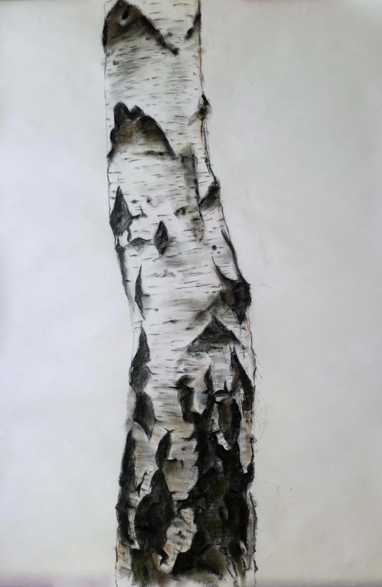 Birkenstamm, Kohle und Pastellkreide auf Papier, 74,5 x 113 cm