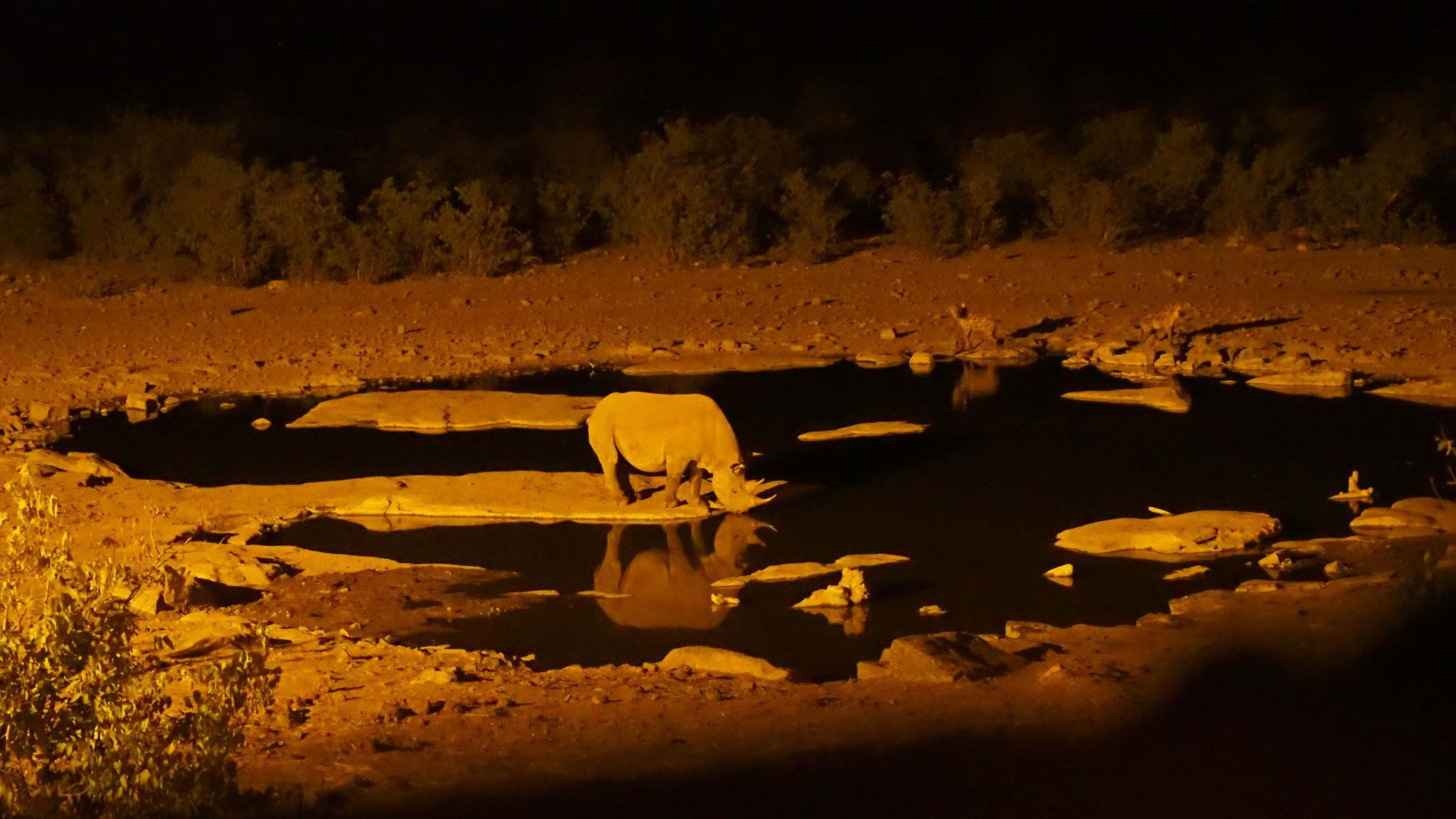 Rhinocéros à Halali - Namibie
