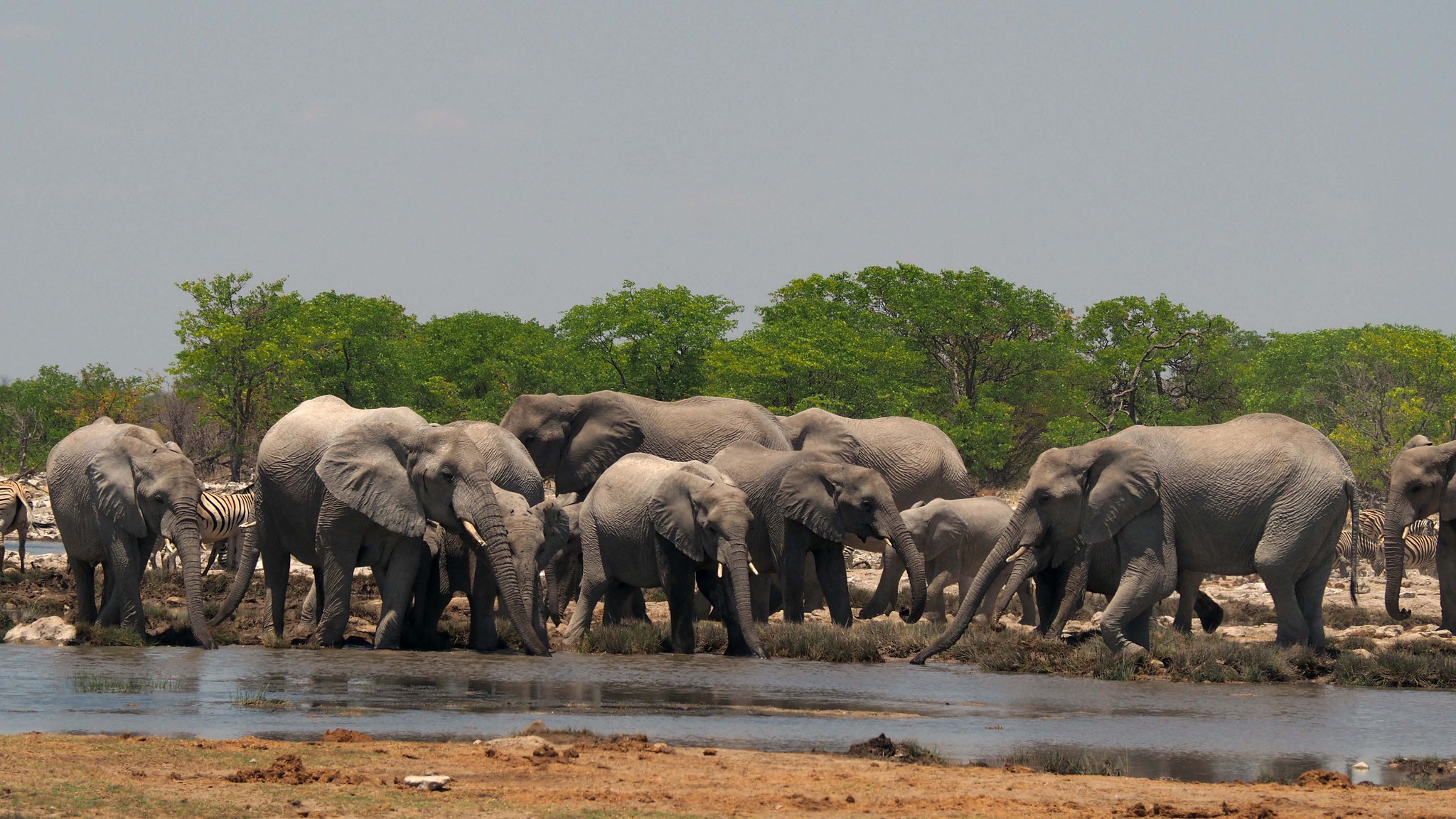 Eléphants à Goas - Namibie