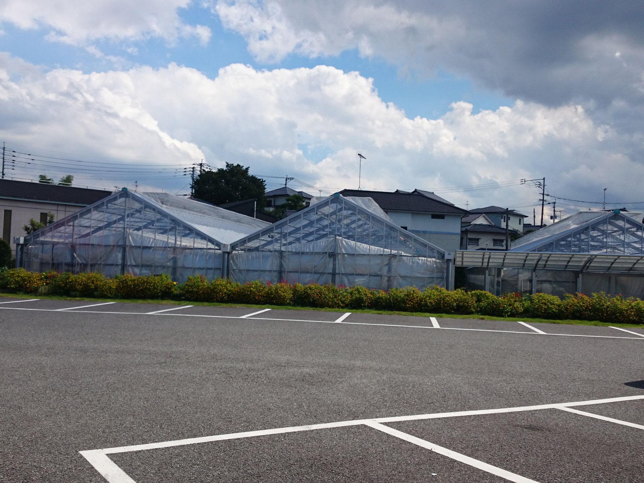 直営農場「わが家の畑」のハウス外観