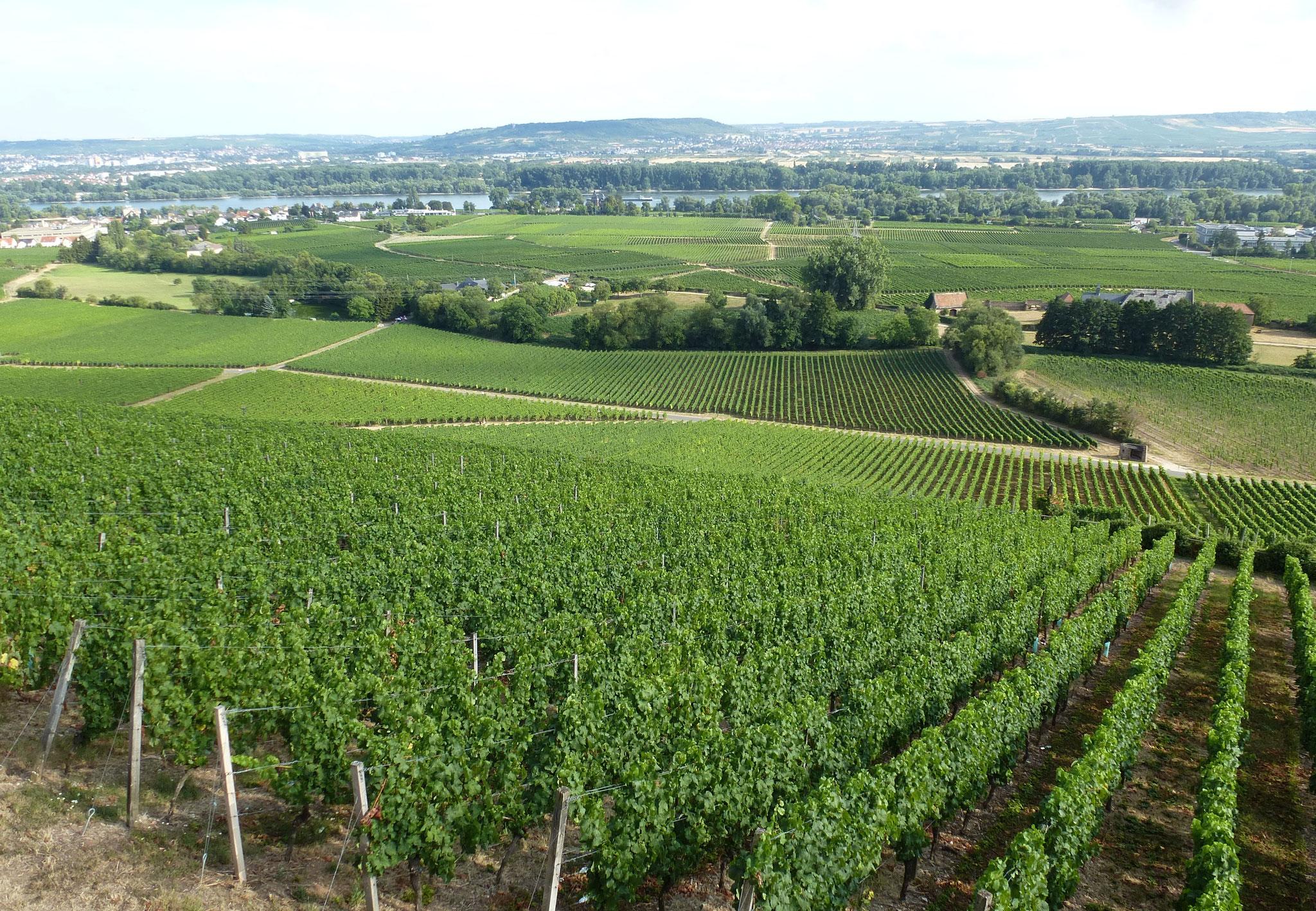 View from Burg Schwarzenstein