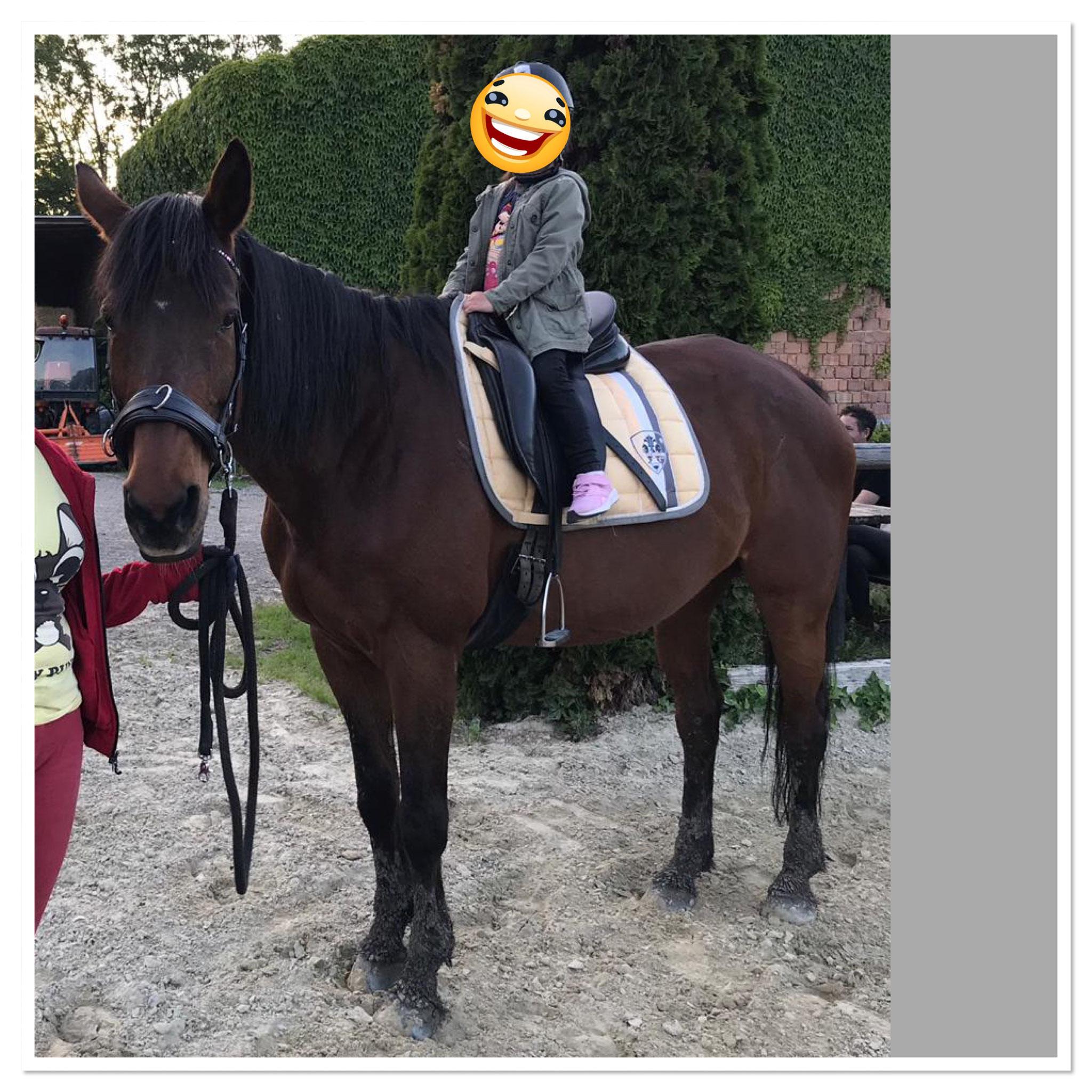 Reitpädagogik - kleines Mädchen ganz groß  -   www.yvonne-fischer.at