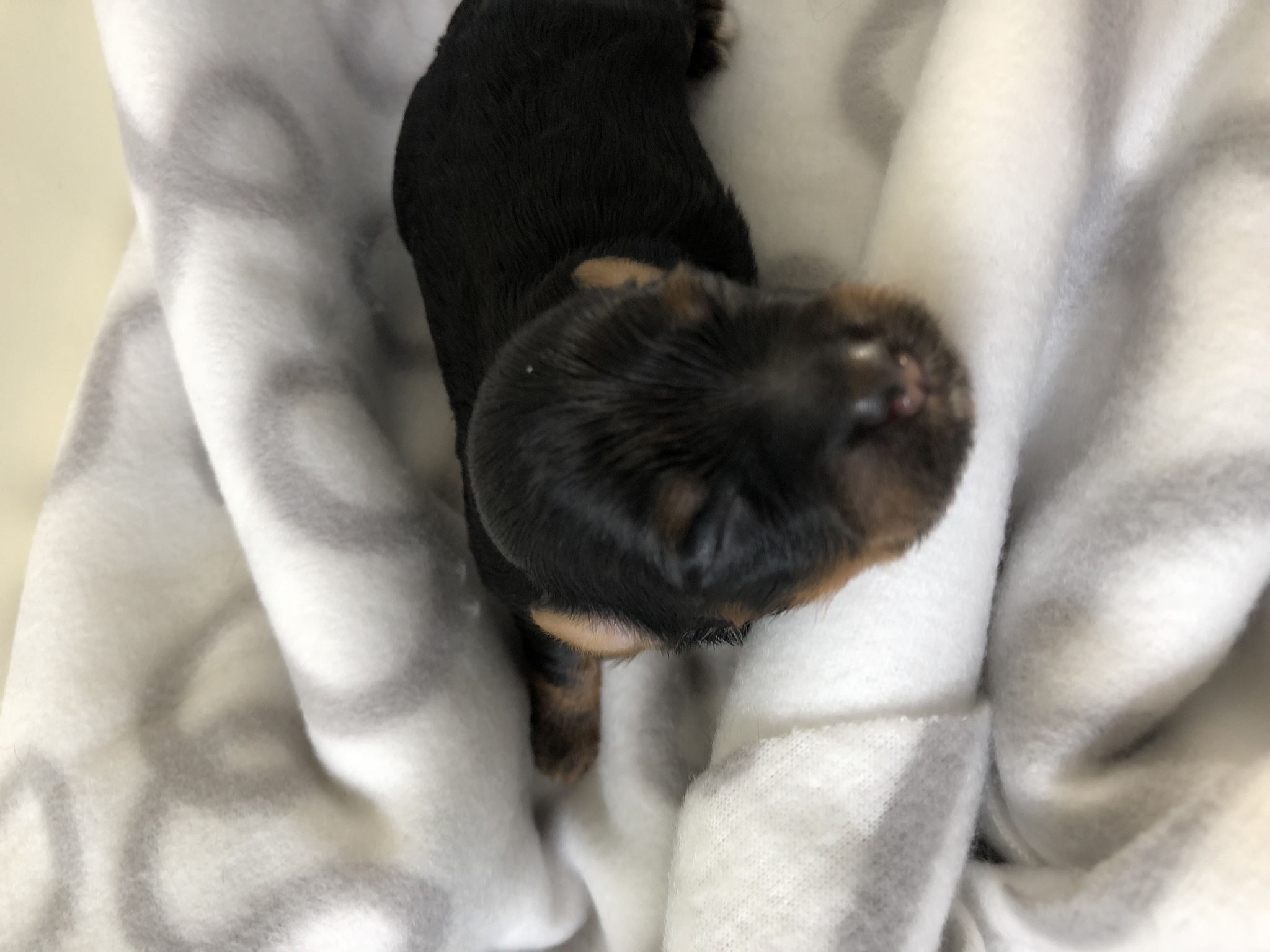 Unser Erstgeborener Zorro!