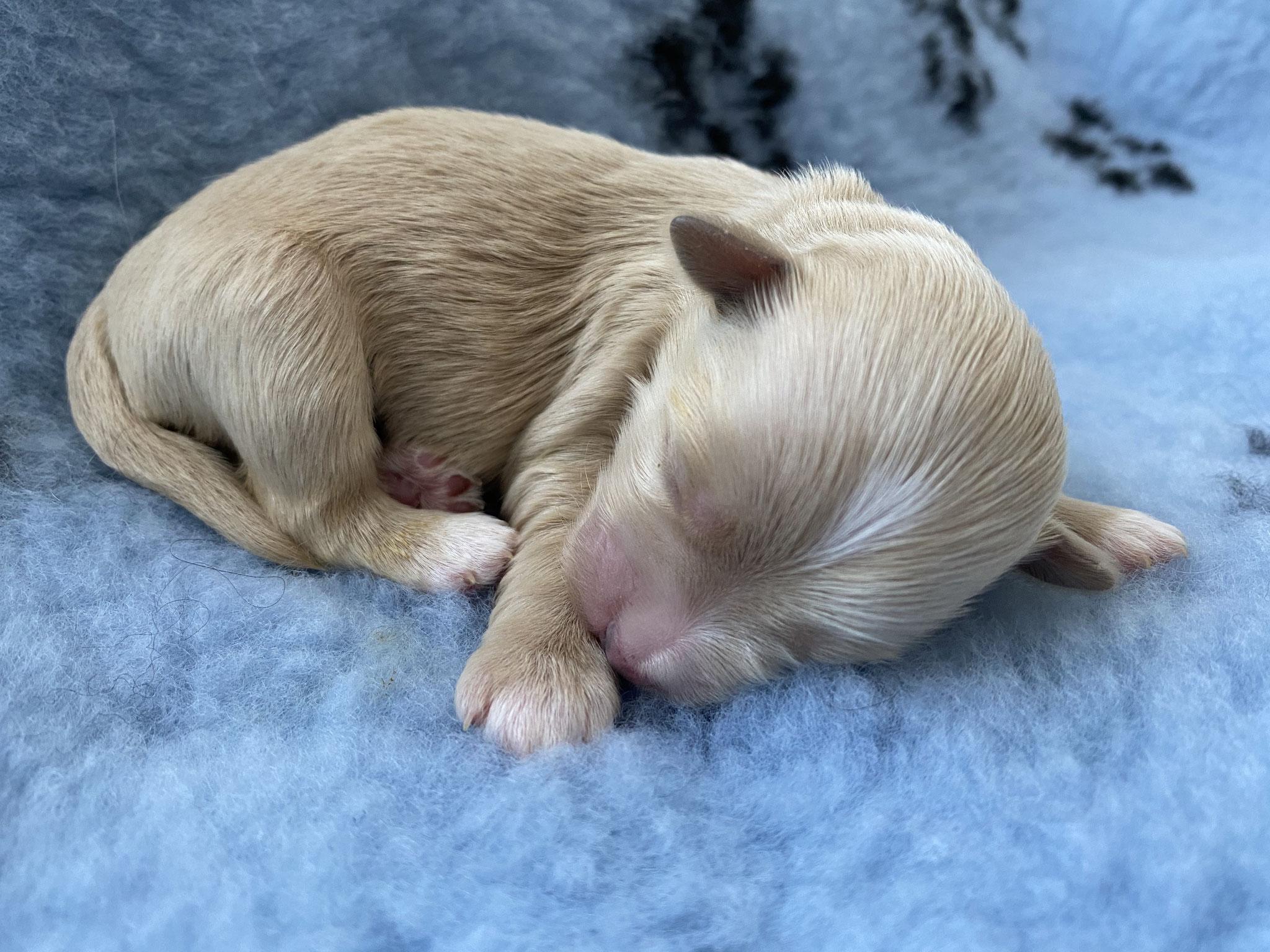 Unser Erstgeborener, Geburtsgewicht: 216 Gramm