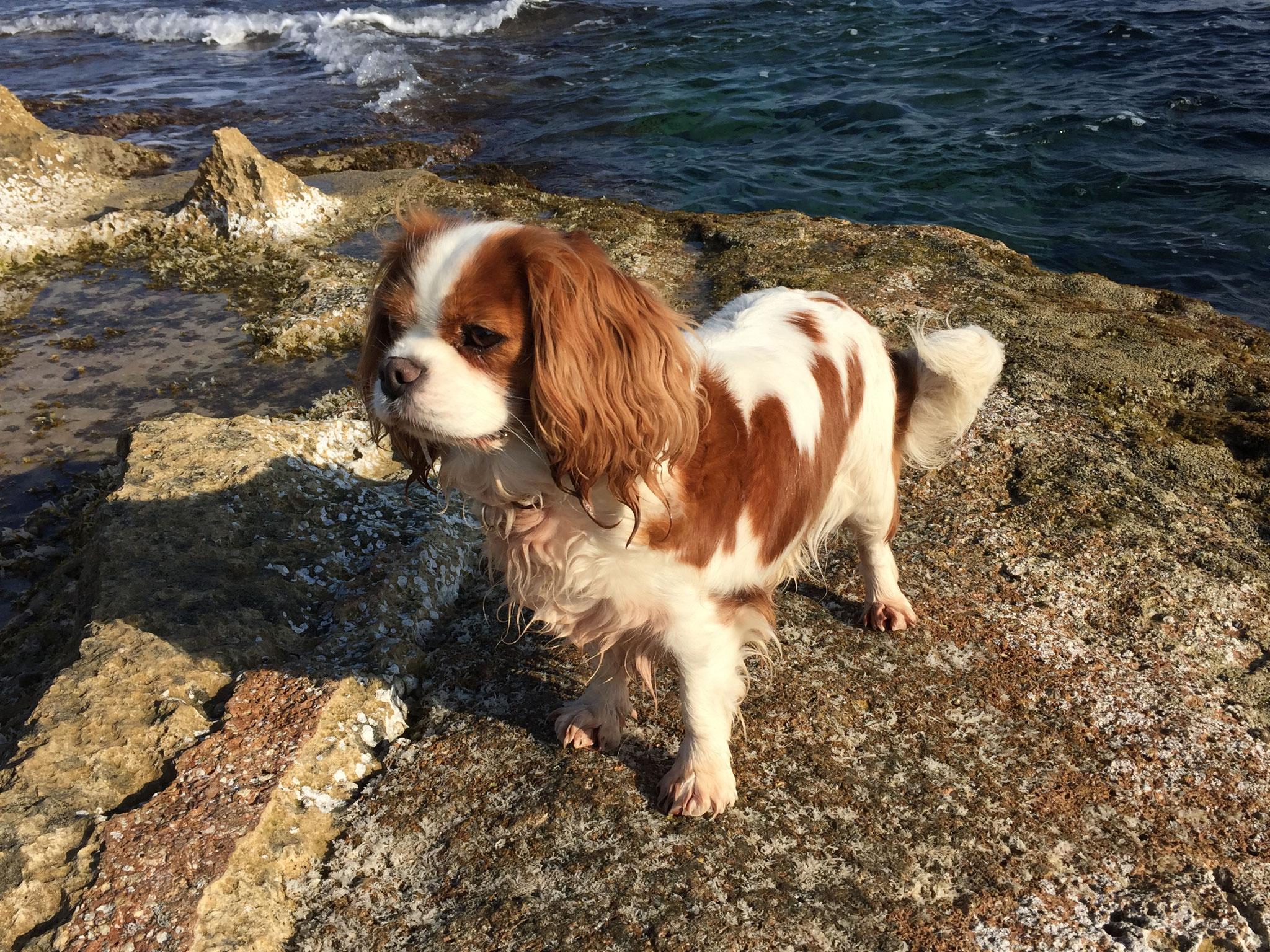 Keira liebet das Meer in Spanien!