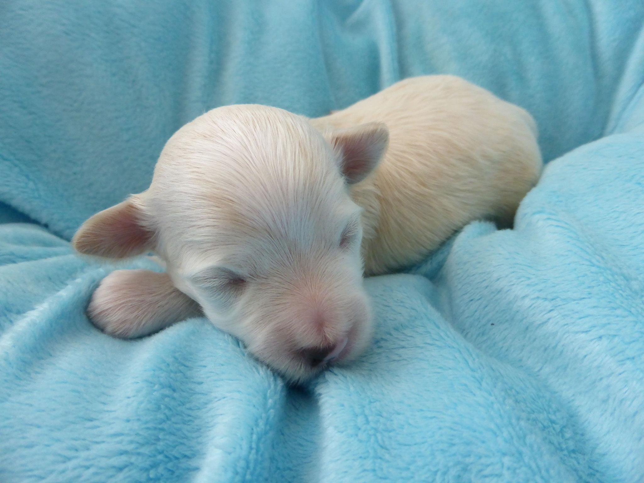 Unser Erstgeborener, ein kleiner Rüde!