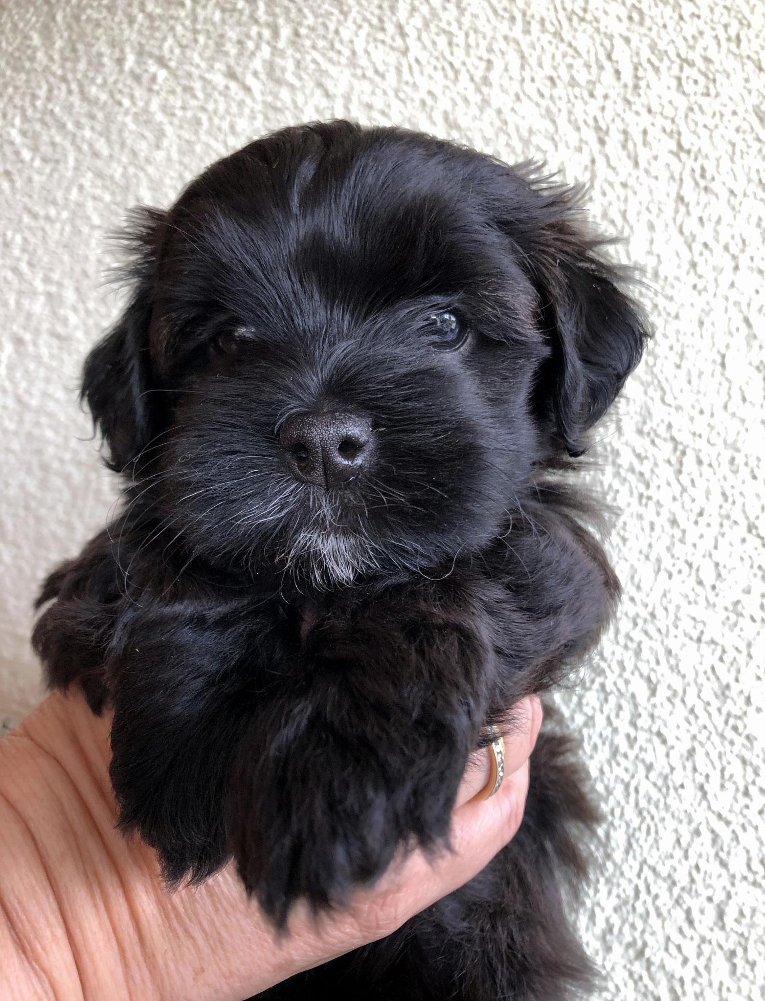 5 Wochen alt: Bonita