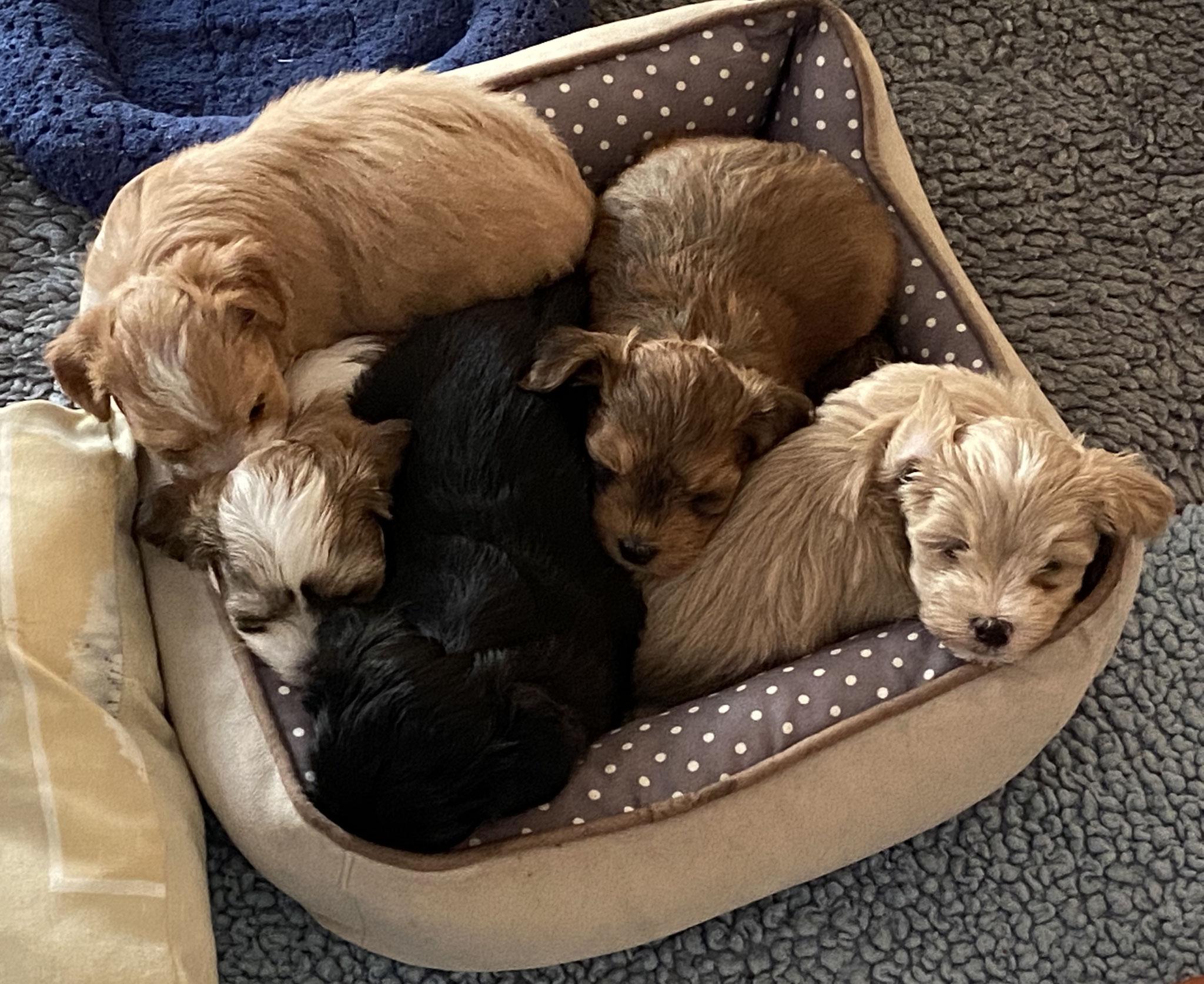 Hilfe, wir haben nur ein Bett!  ; - ))