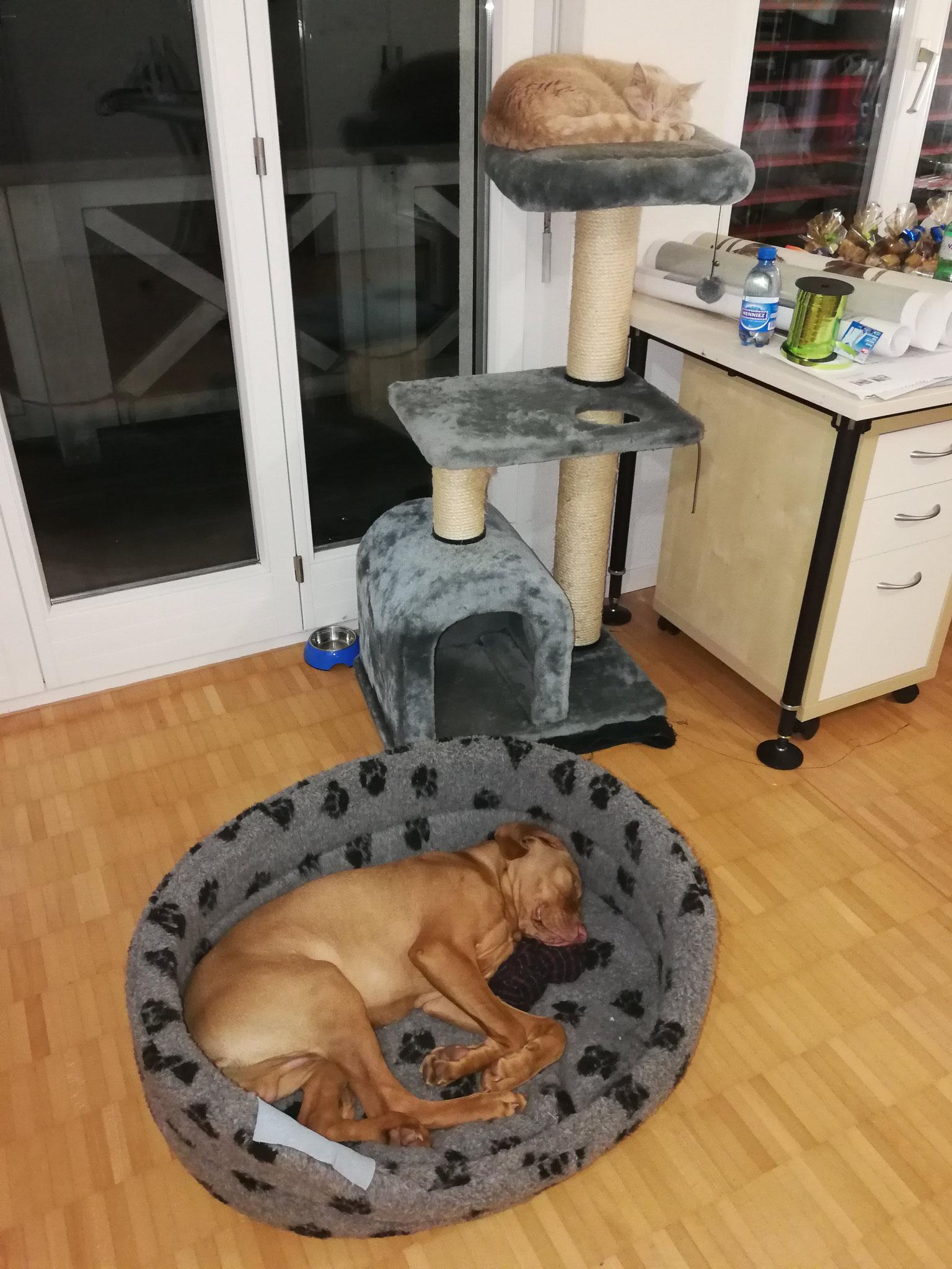 20 Wochen, zuhause, wo ist jetzt die Katze, resp wer ist hier der Chef?