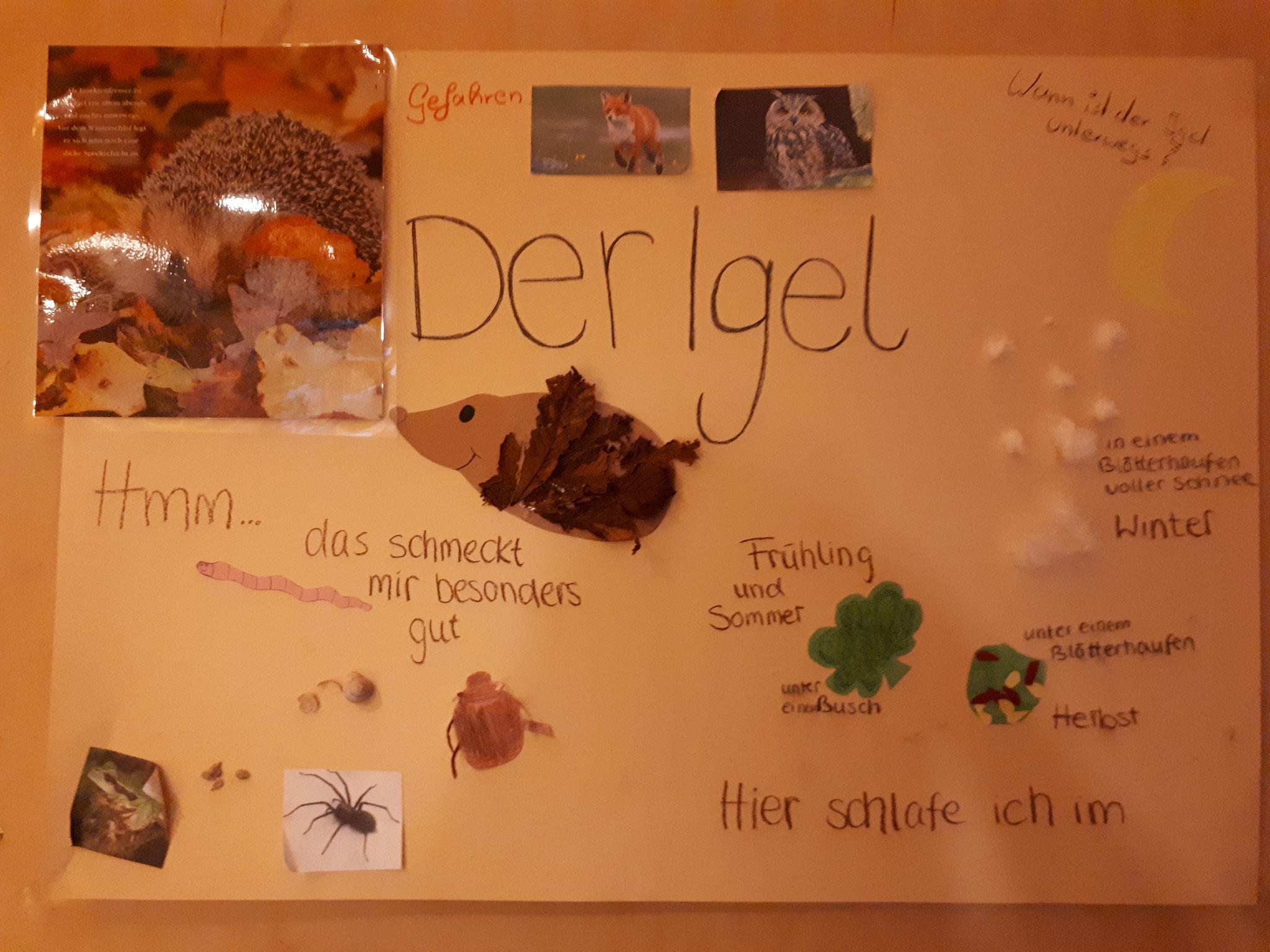 Kinderkrippe Thema: Der IGEL