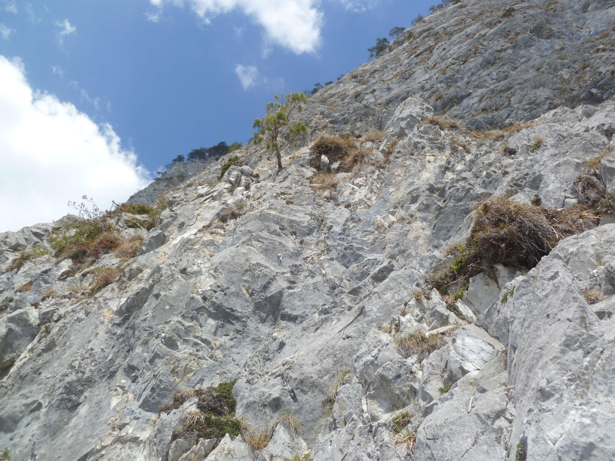 Erst leichte Kletterei, dann Schrofen in der zweiten Länge