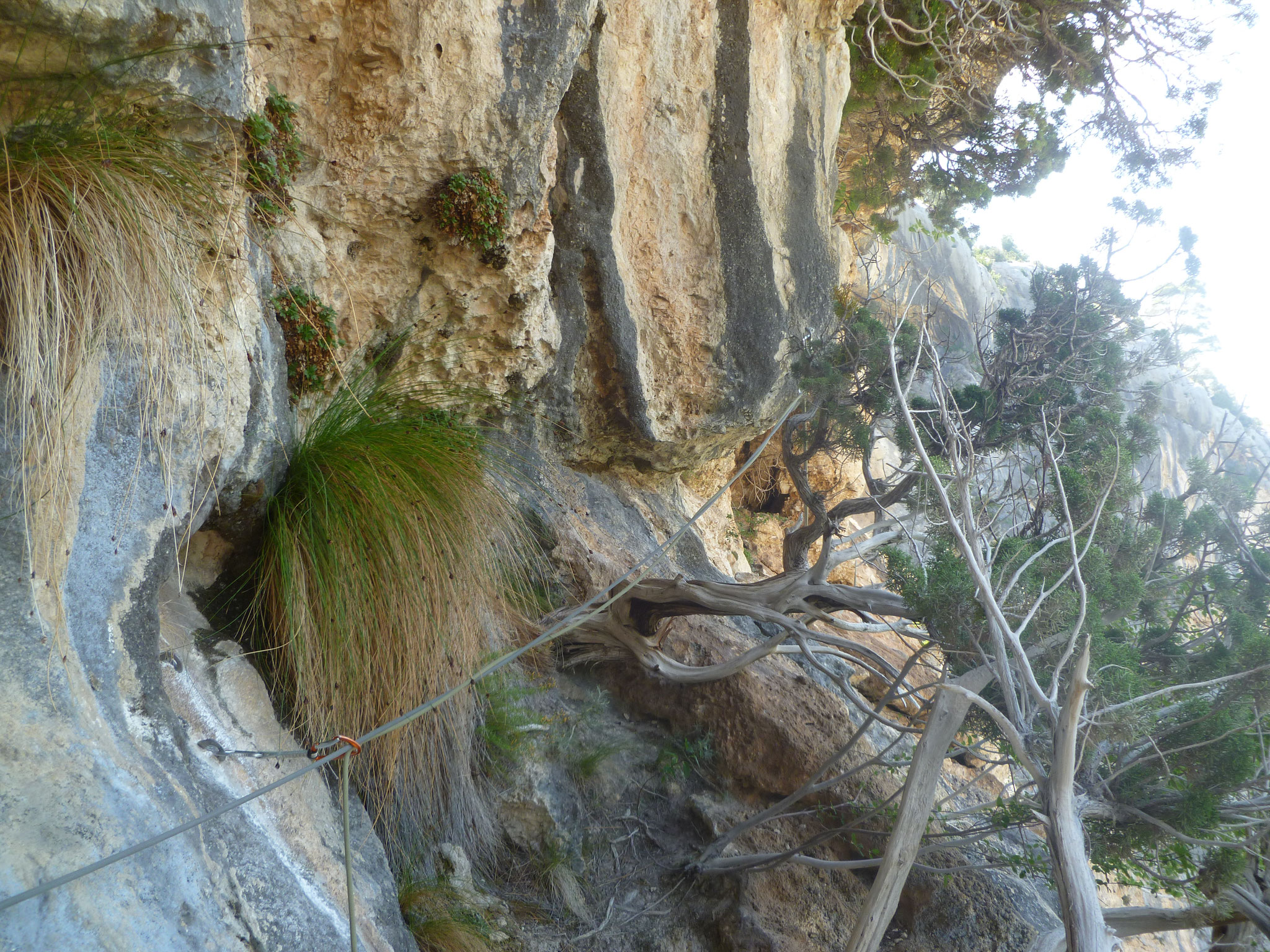 Die erste Quergangslänge: leicht und botanisch