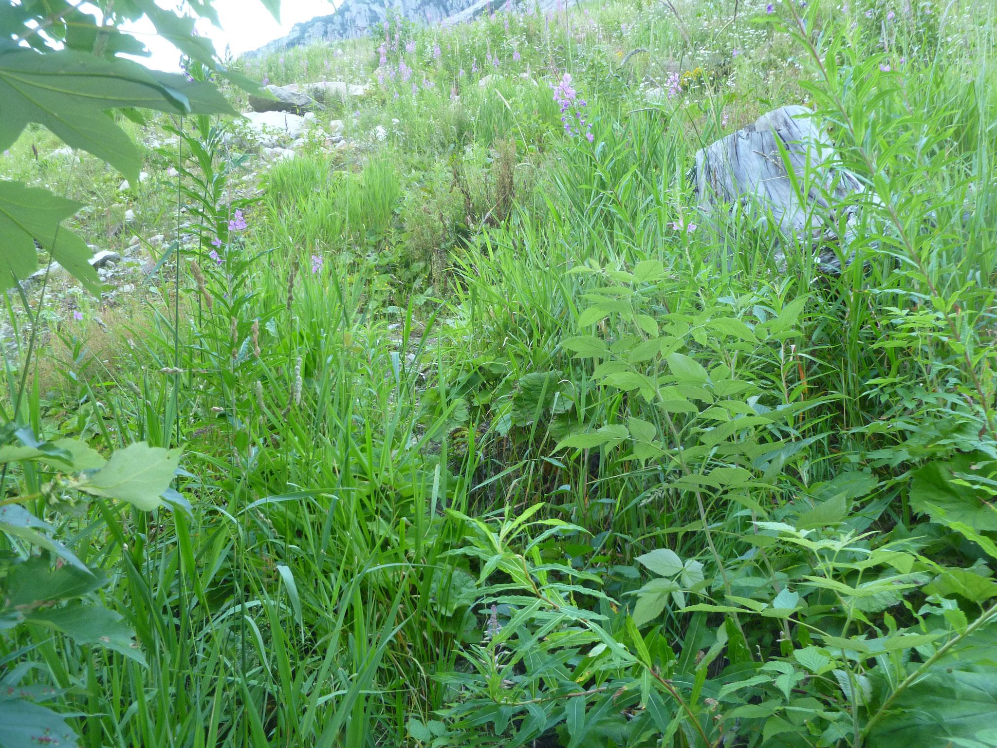 Wir wählen den Gras - Zustieg (eh klar)