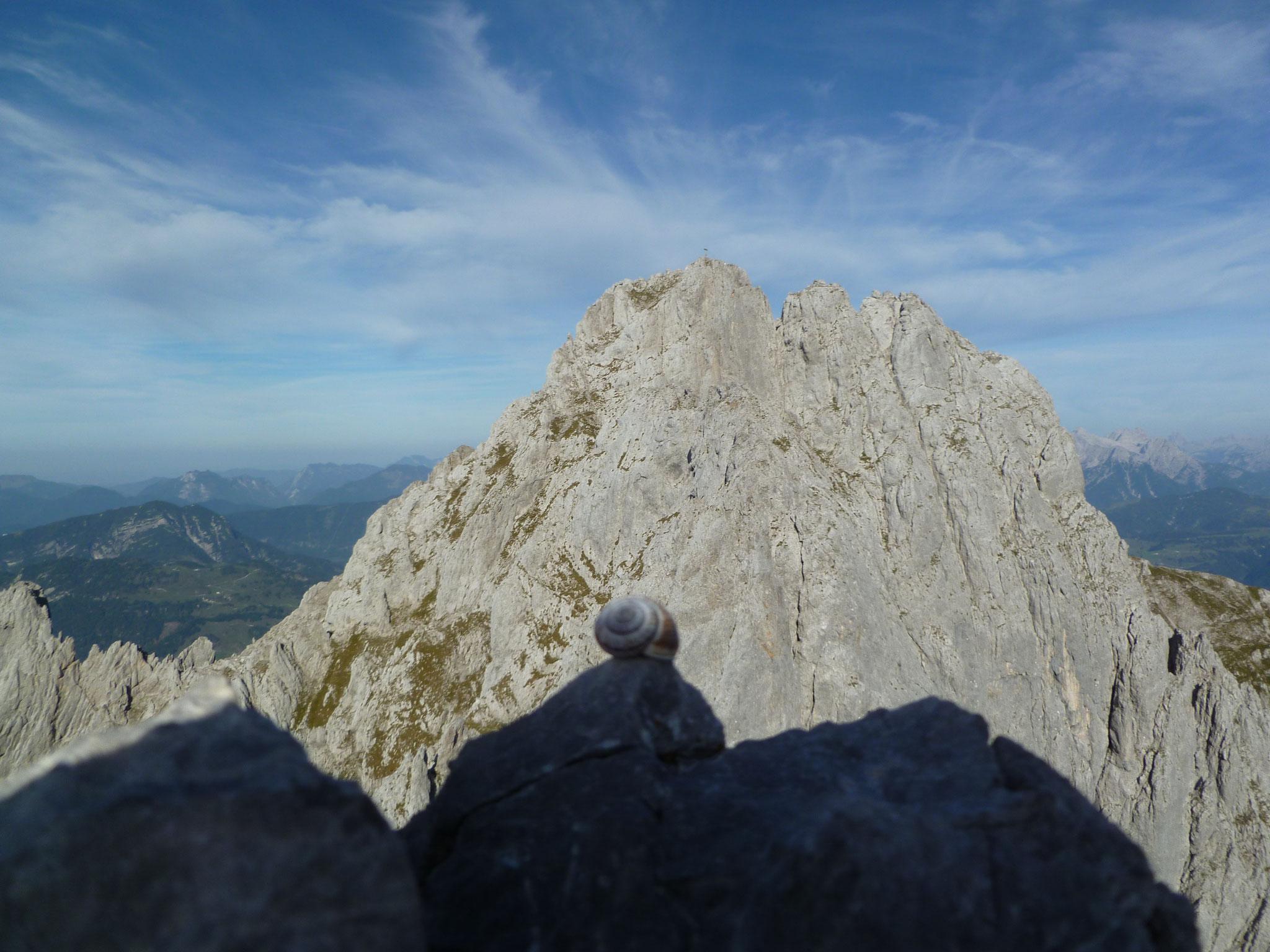 Die Alpinschnecke ist am Gipfel! Im Hintergrund die Ackerlspitze.