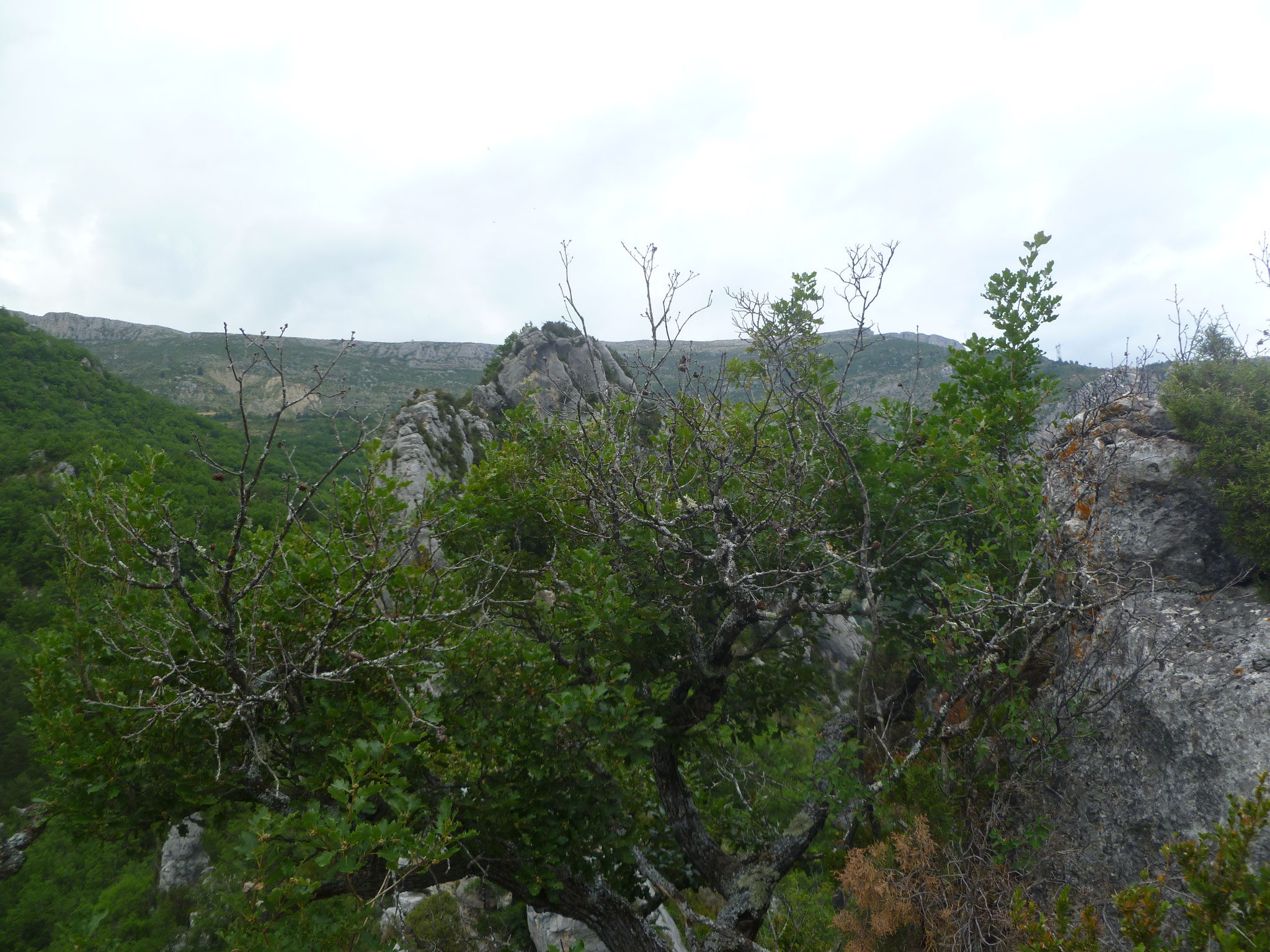 Blick über den Grat