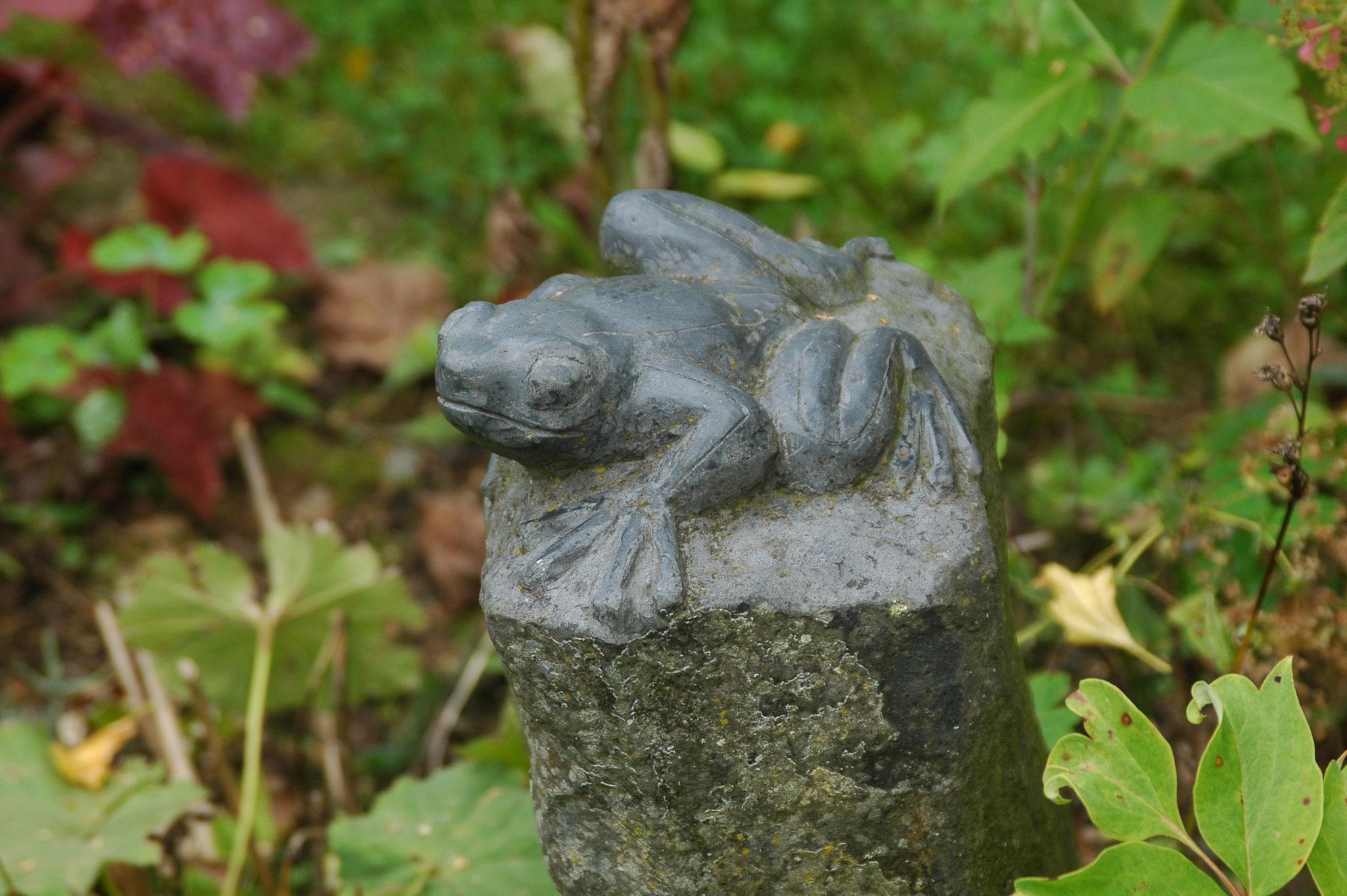 Frosch auf Säulenbasalt