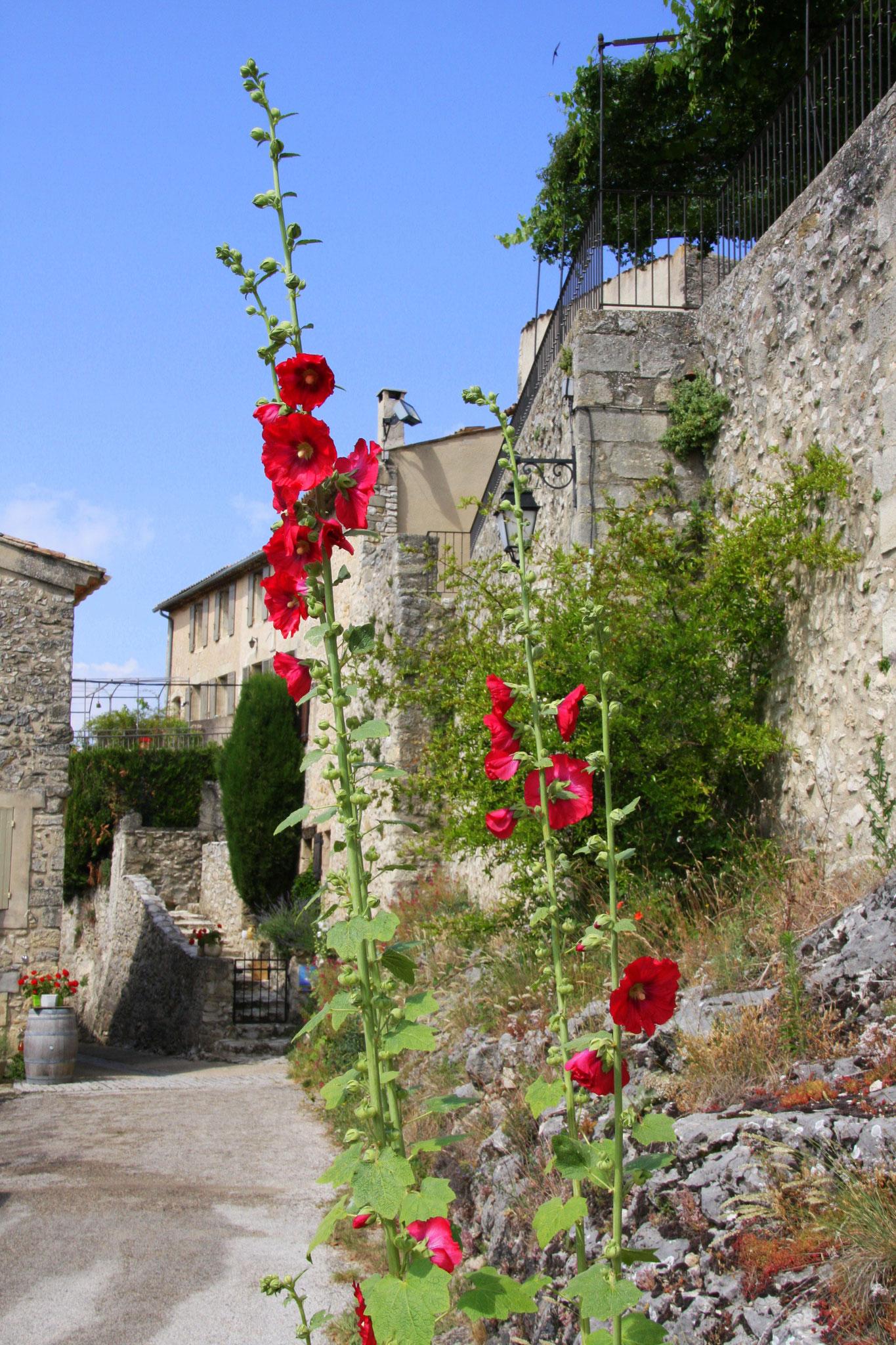 Bild: Aurel am Mont Ventoux