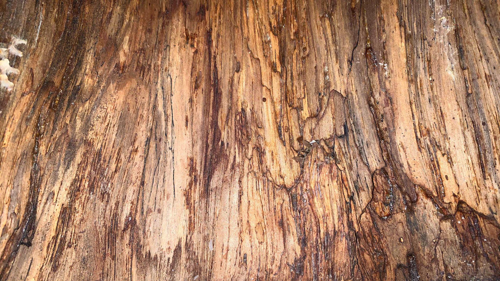 Vor dem Einzug war die Höhleninnenwand mit morschen, locker ansitzenden Holzteilen versehen. Nach einem Jahr macht das Innere einen wohligen Eindruck.