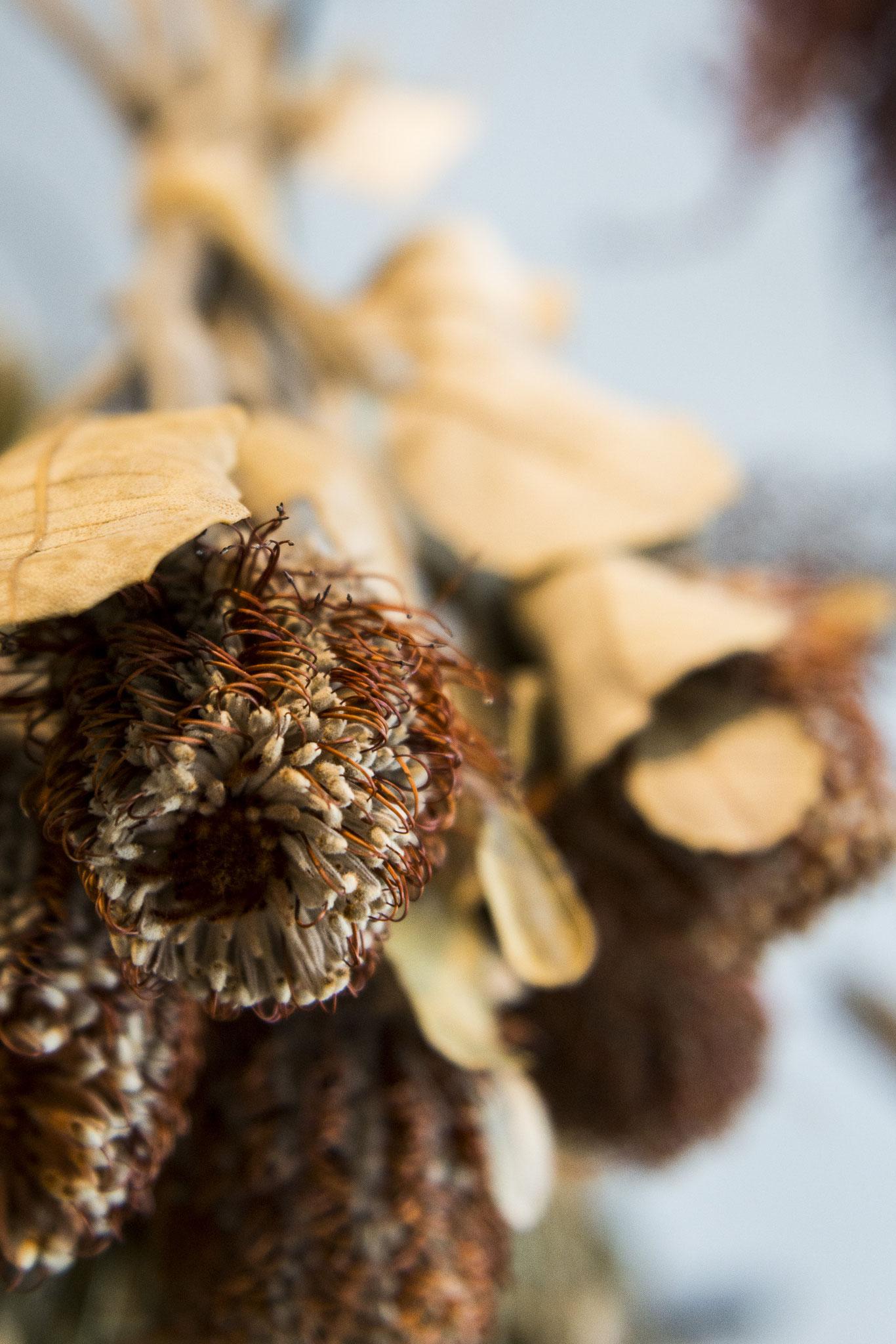 les fleurs séchées et naturelles