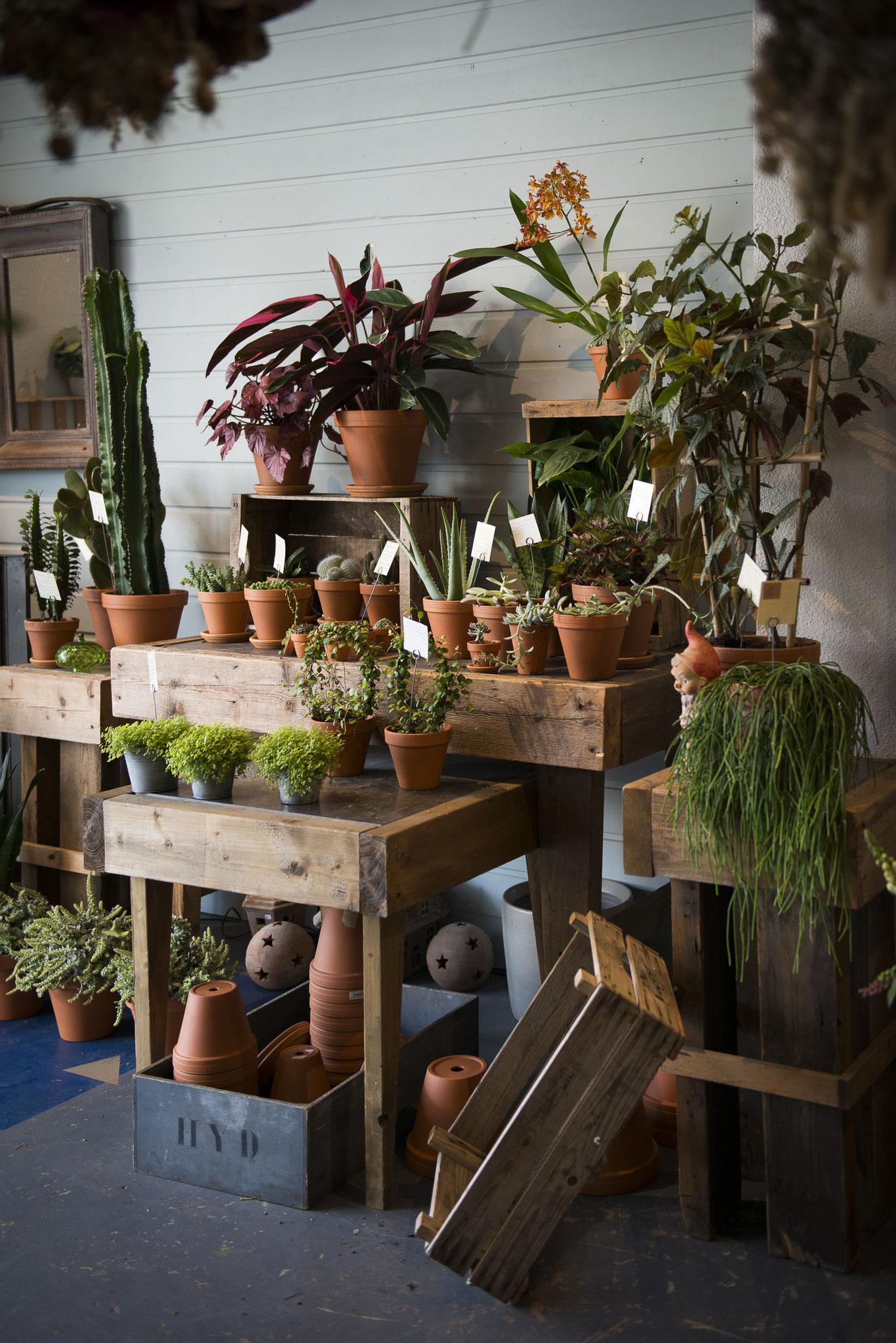 Le coin plantes diverses et variés selon les arrivages