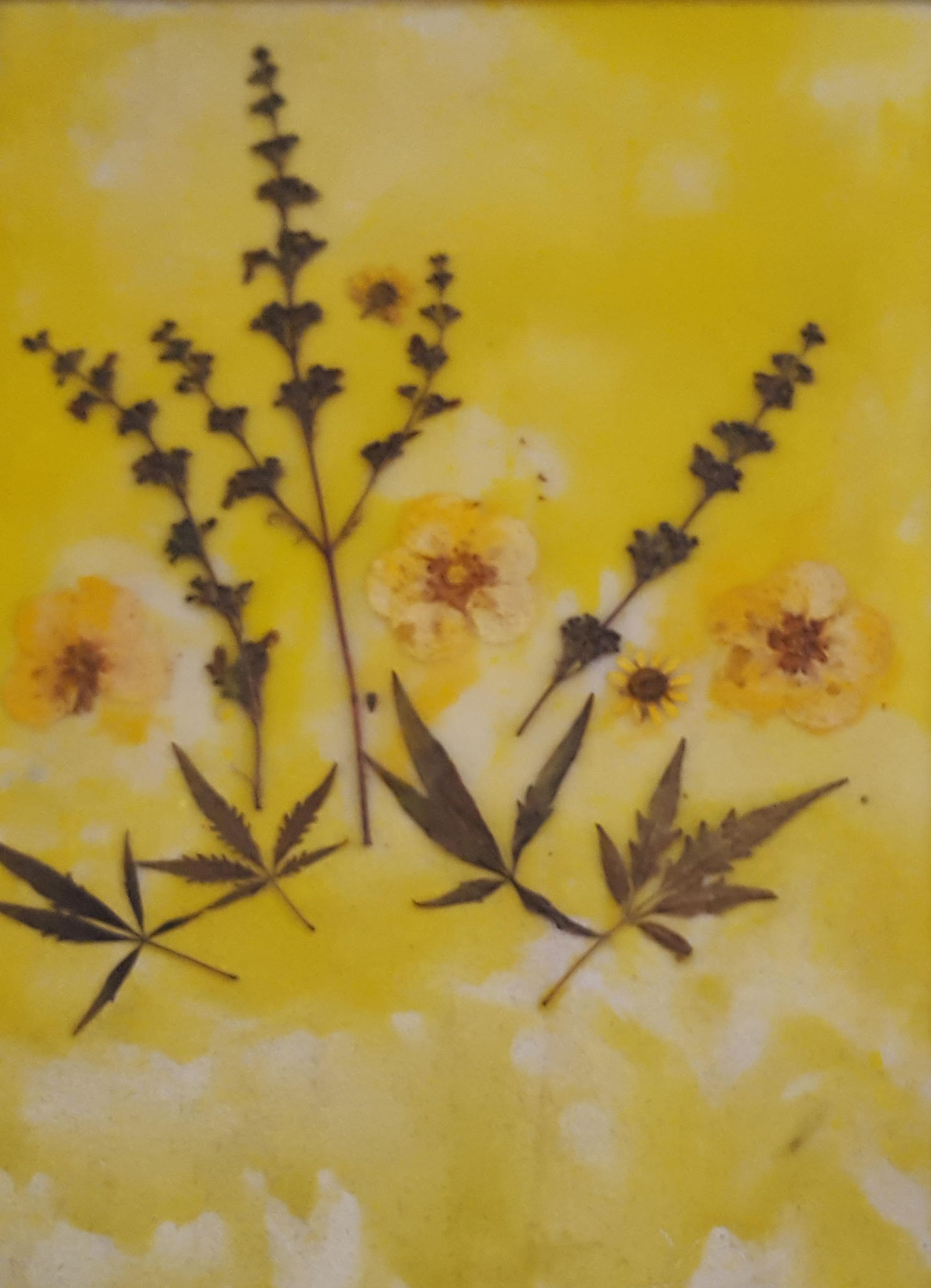 Nr. 109 - Blumenbild mit echten Blüten DIN A4 - 200 €
