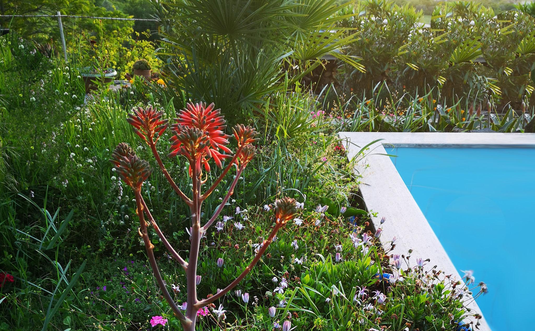 Pool mit Gartenansicht © Ferienwohnung Spilinga | Tropea | Kalabrien - Casa Belle Vacanze