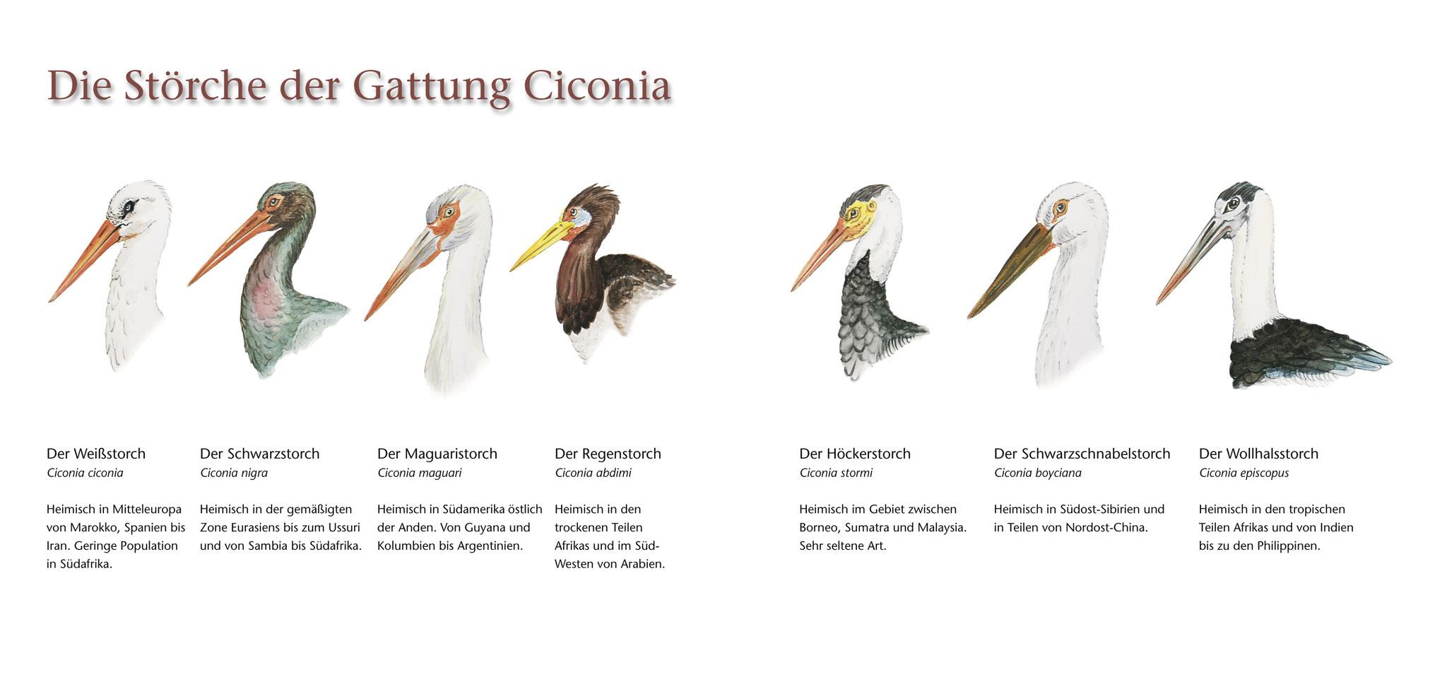 """Tier-Illustrationen für das Buch """"Der Storch"""""""