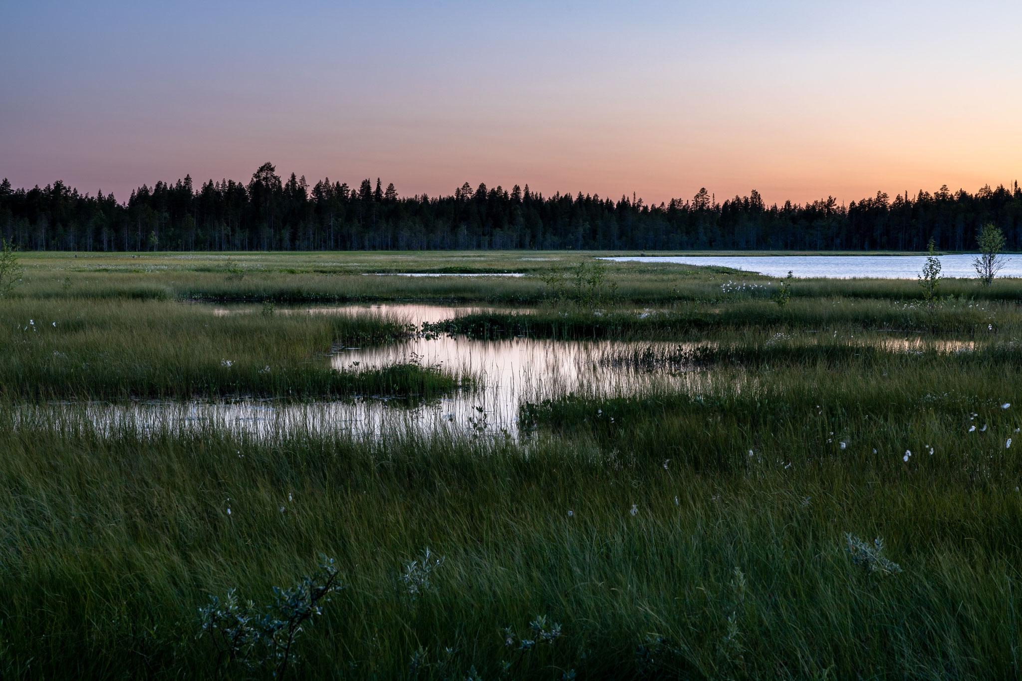 Abendstimmung im Sumpf