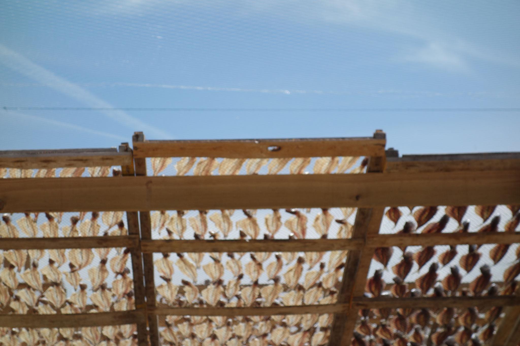 Traditionelle Fischtrocknung am Strand von Nazaré