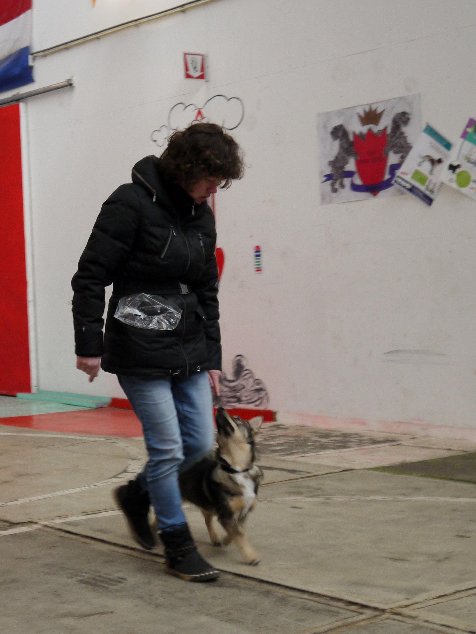 Volgen bij de beginners (op hondenschool The Little Prince)