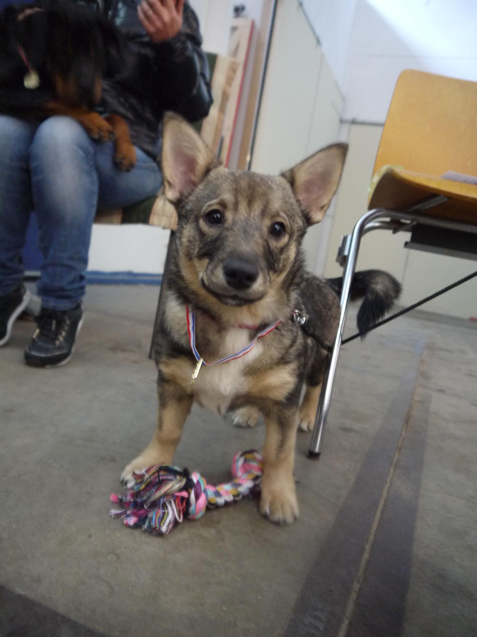 Geslaagd voor haar puppyexamen! (op hondenschool The Little Prince)
