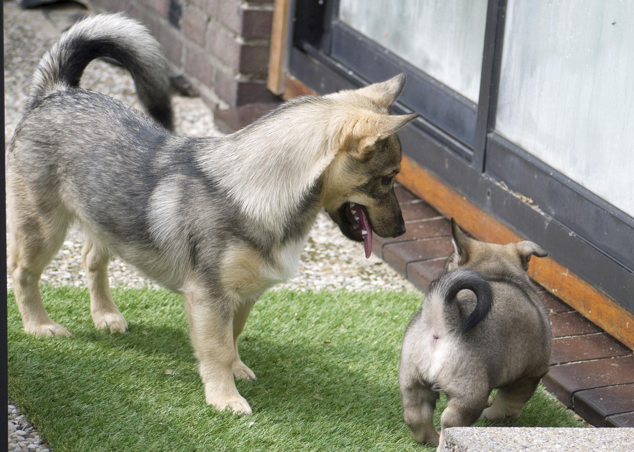 Puppy'k kijken bij Tindra