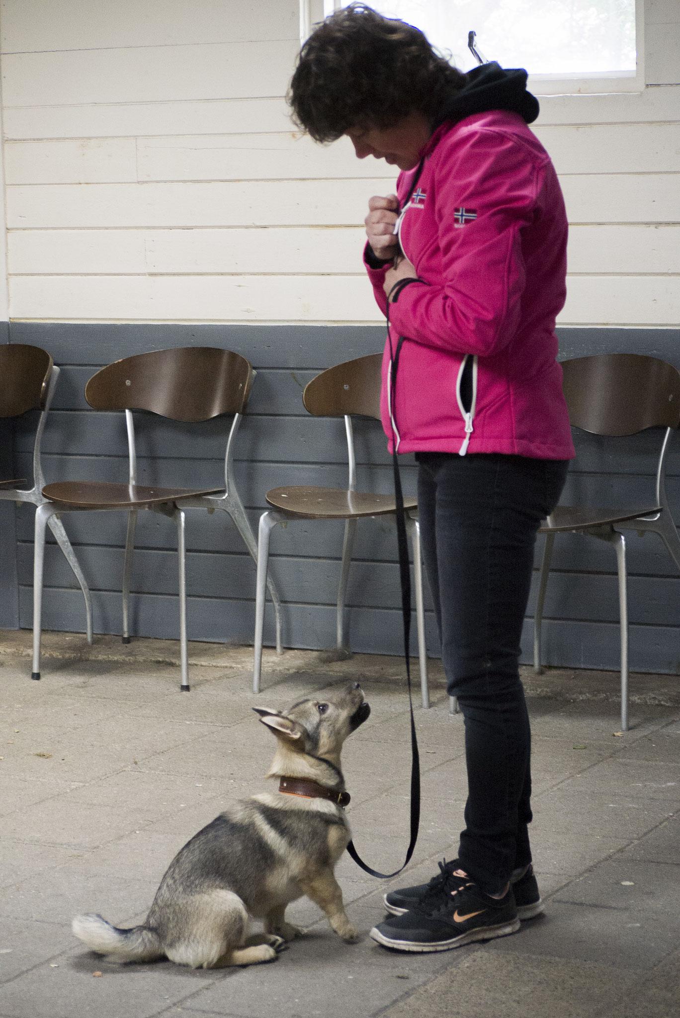 In de puppyles: aandacht voor de baas heeft ze wel