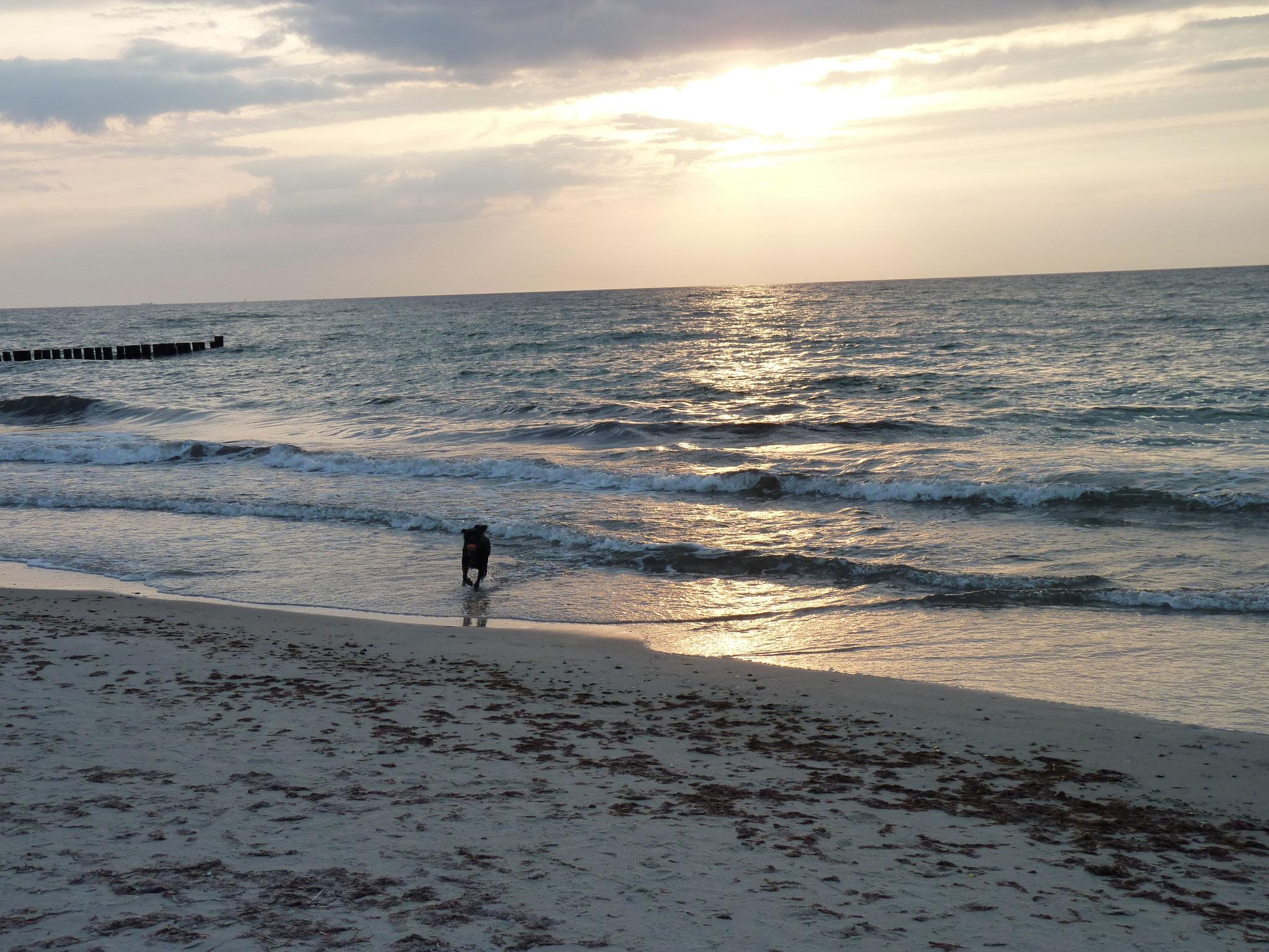 Jede Menge Strand und wilde, unberührte Natur.     Wo kann man Landschaft, Kunst und Muße intensiver erleben als hier auf dem Darß.  Der Darß – korrekter Weise, die Halbinsel Fischland - Darß - Zingst waren ursprünglich drei eigenständige Inseln