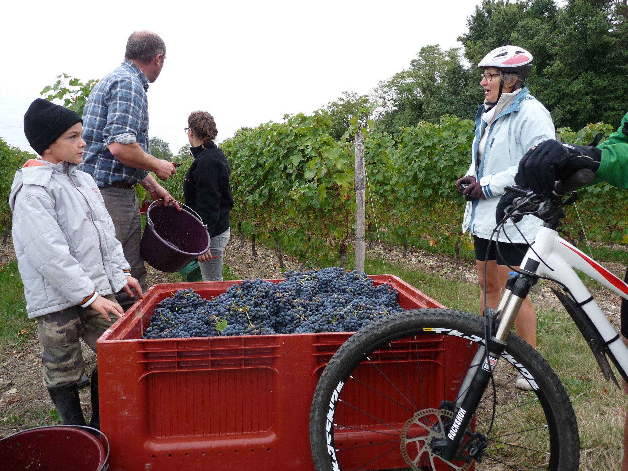 Vins et Champignons Saumur 2016