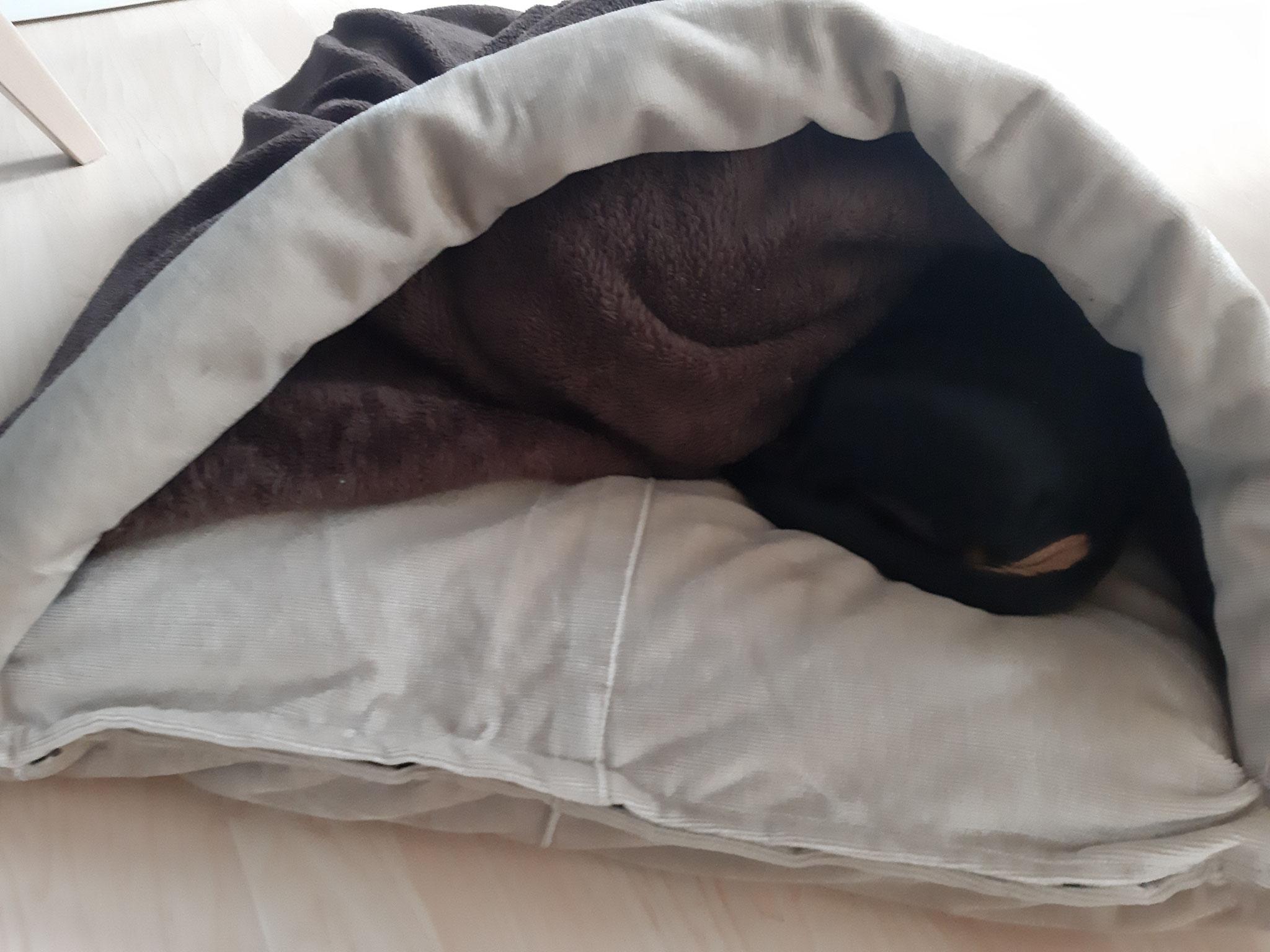 Hundehohle Mit Kuschelkissen Atelier Geschenke Ines Jaitner