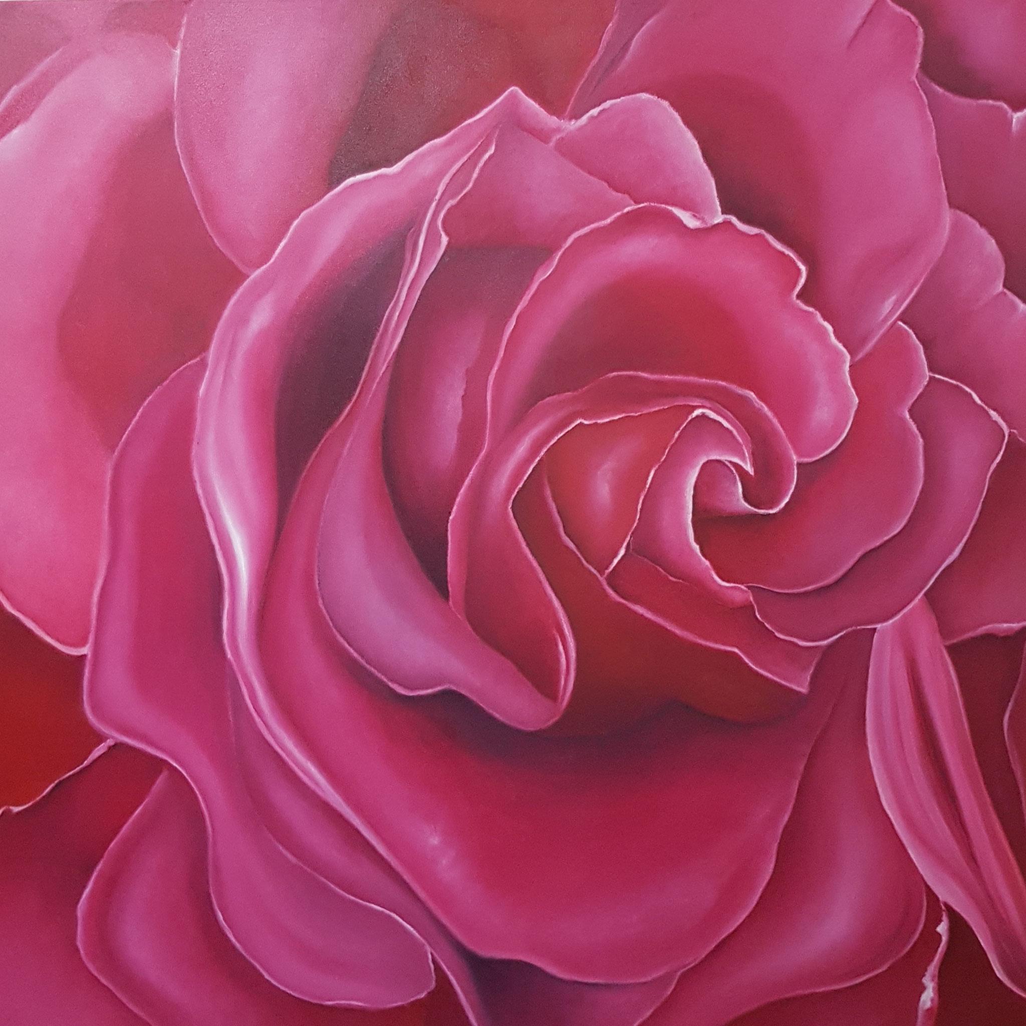 Rose-in-Pink-Rosenbild-Rheingau-100x100cm-realistische-Malerei-Malereien-Bilder-kaufen-mieten