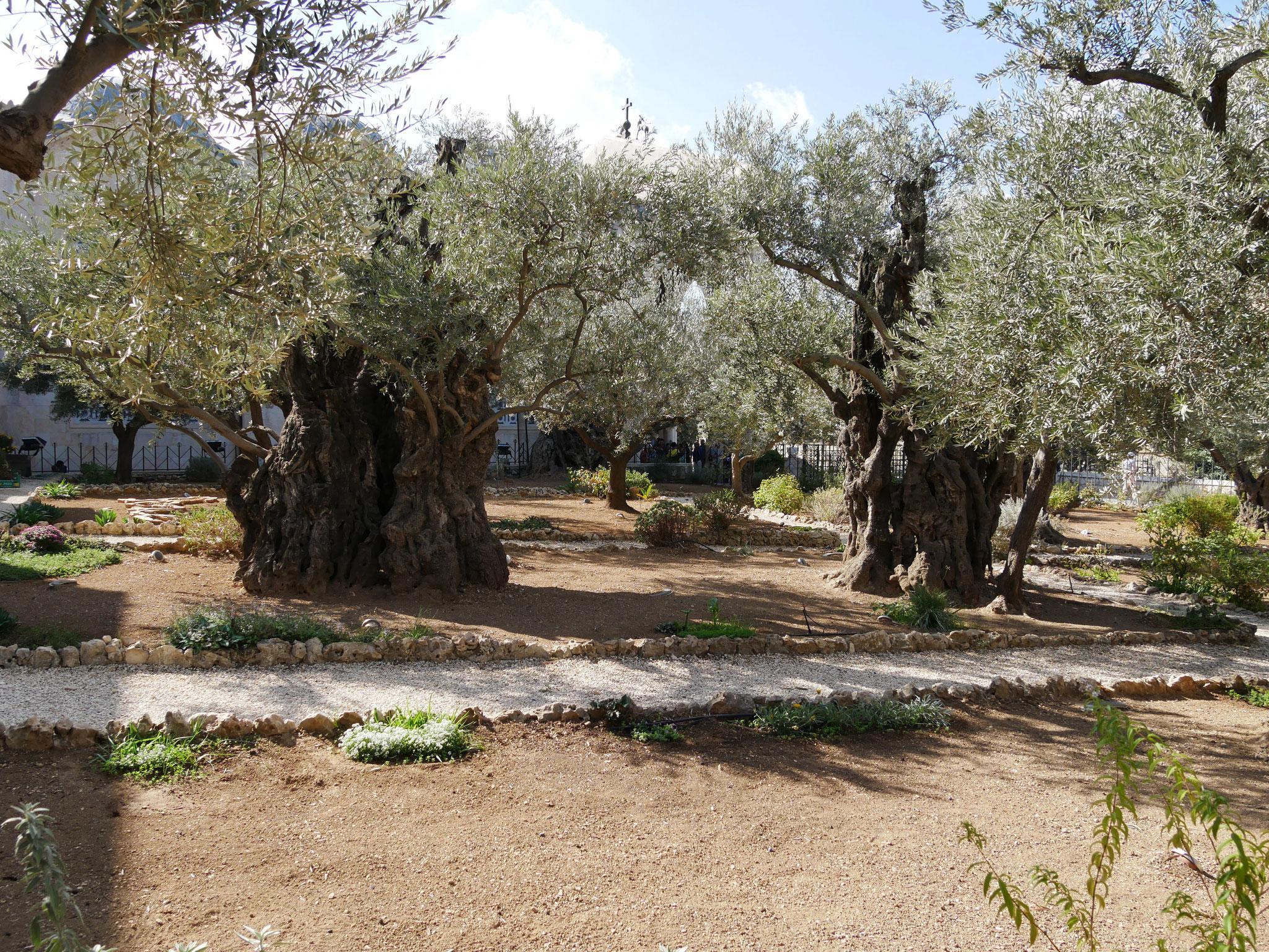 Im Garten Gethsemane