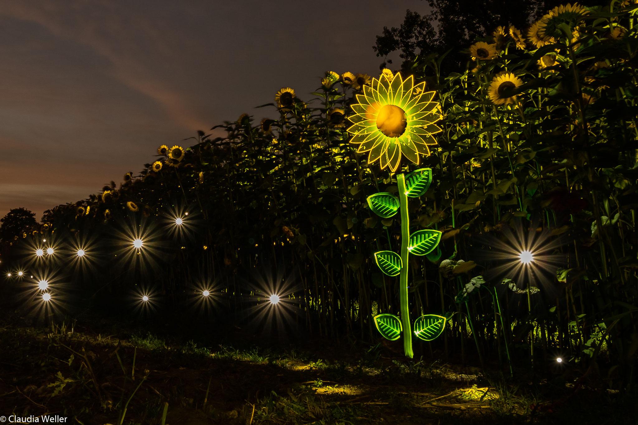 Sonnenblömkes im Feld