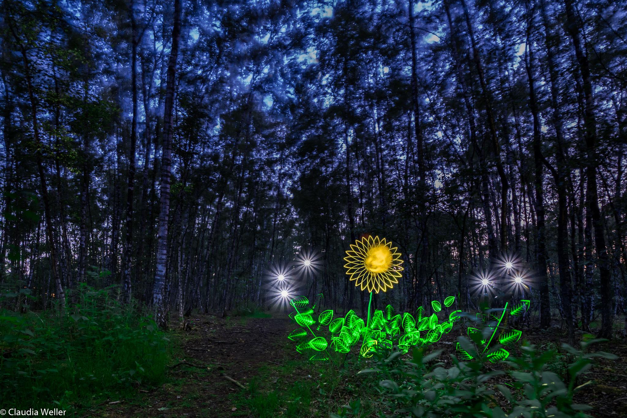 Margerite-Lichtblömke