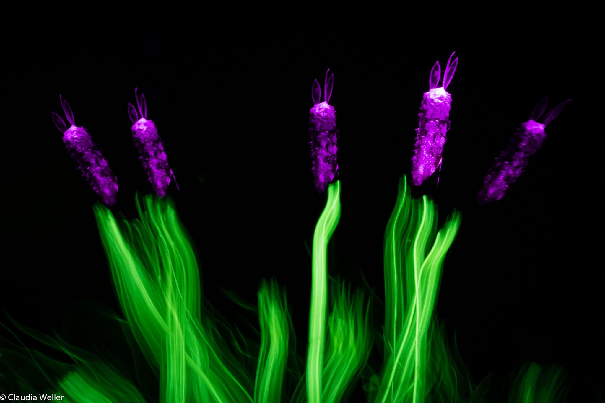 Lavendelblömkes