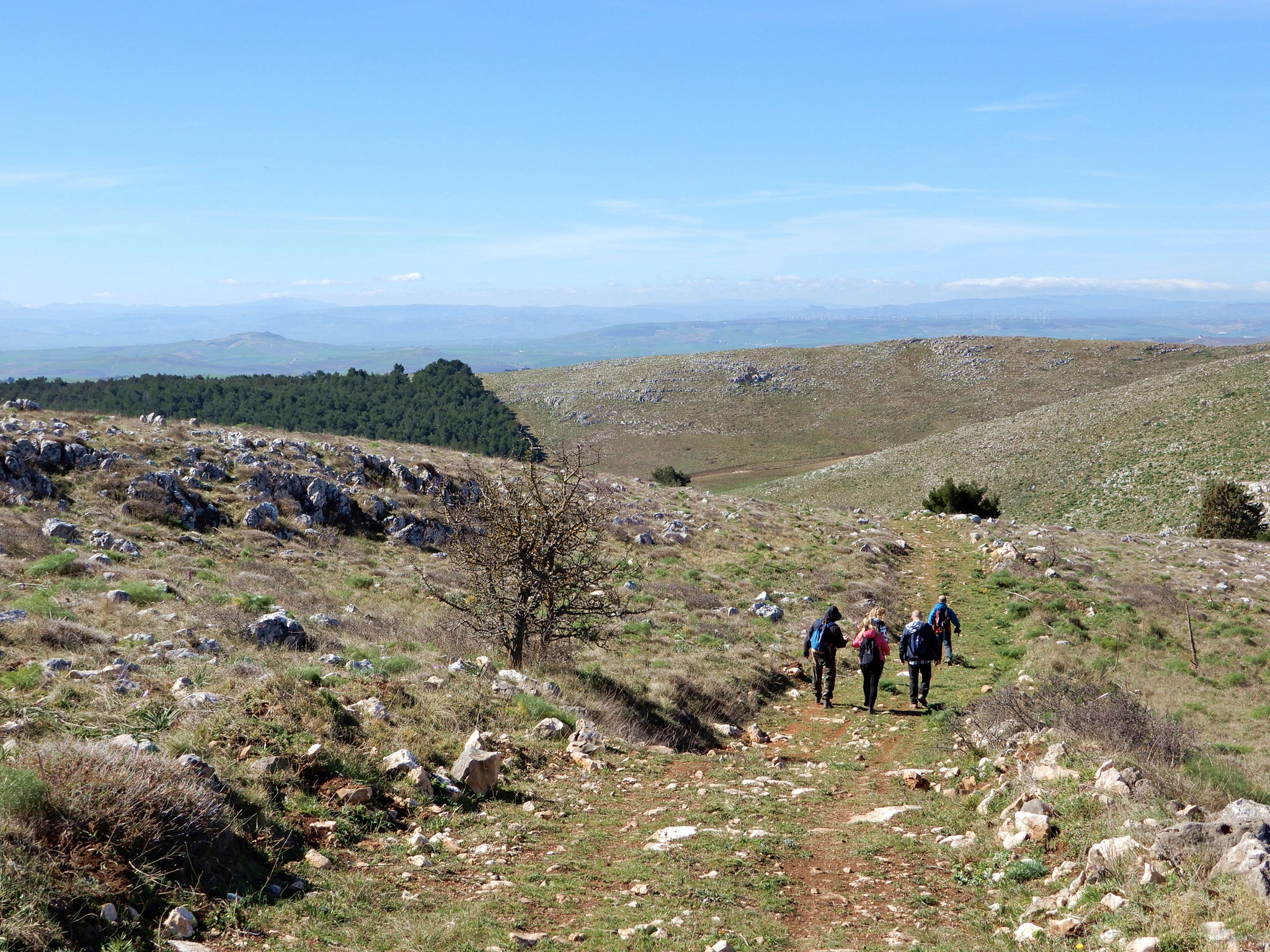Among the typical rocky pasture trails in the Alta Murgia park