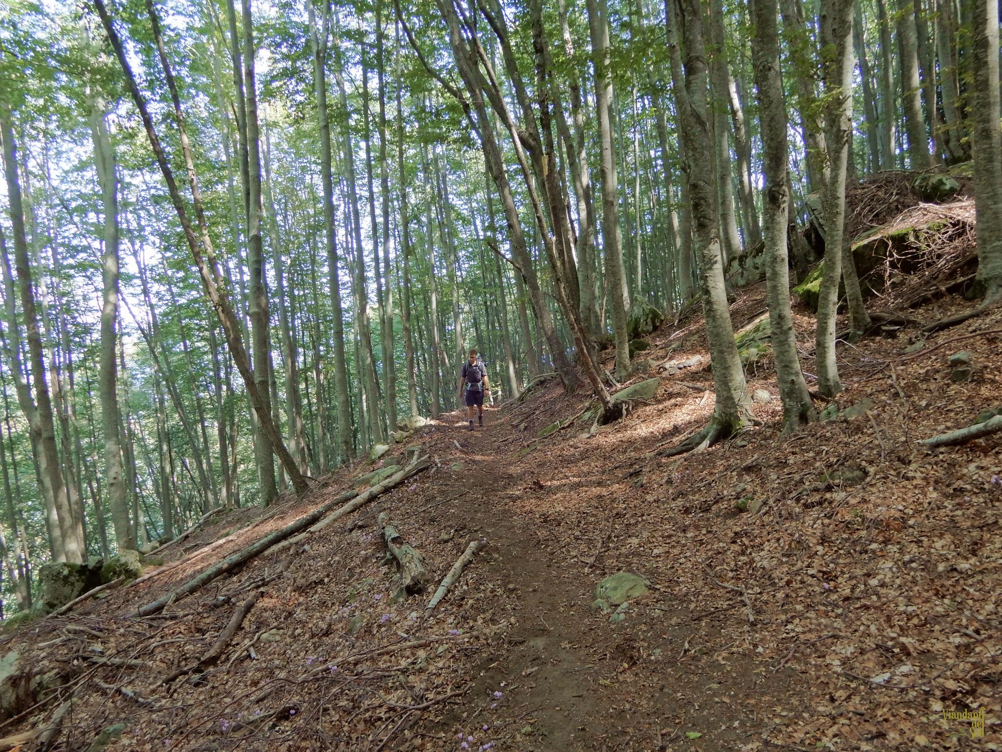 Bosco di Monte Scuro
