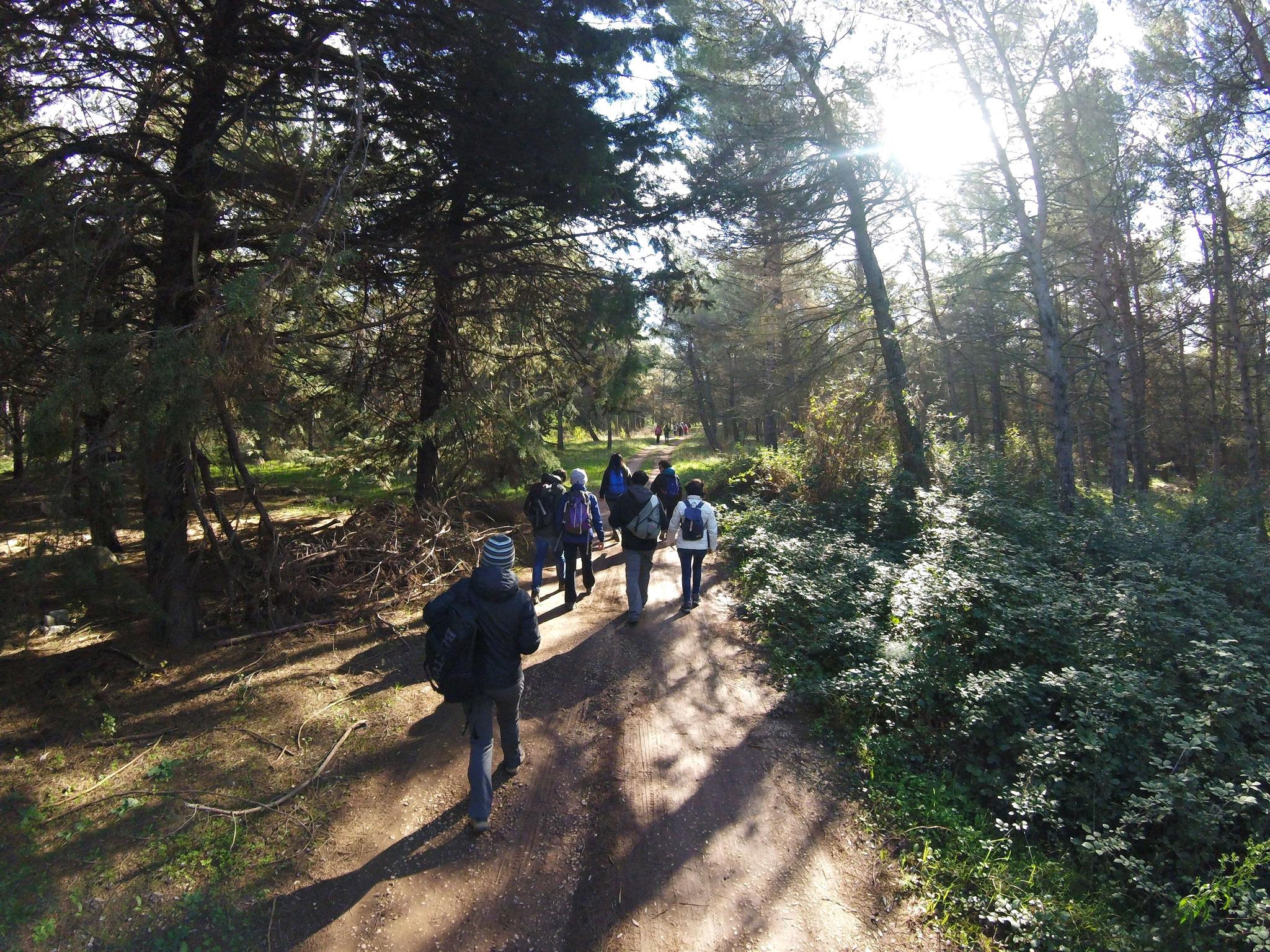 Sui sentieri del Bosco Acquatetta